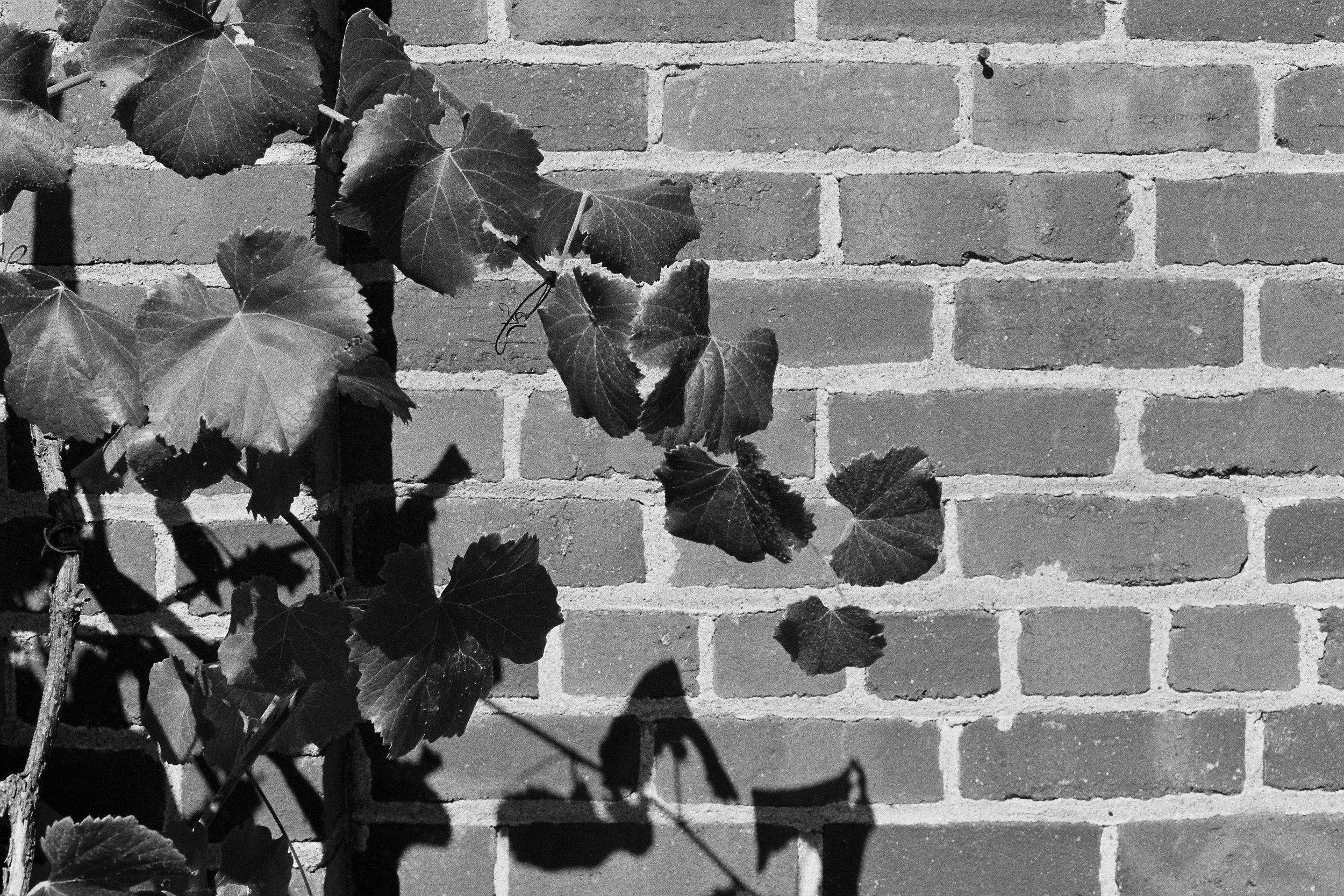 Leaves & Bricks.jpg