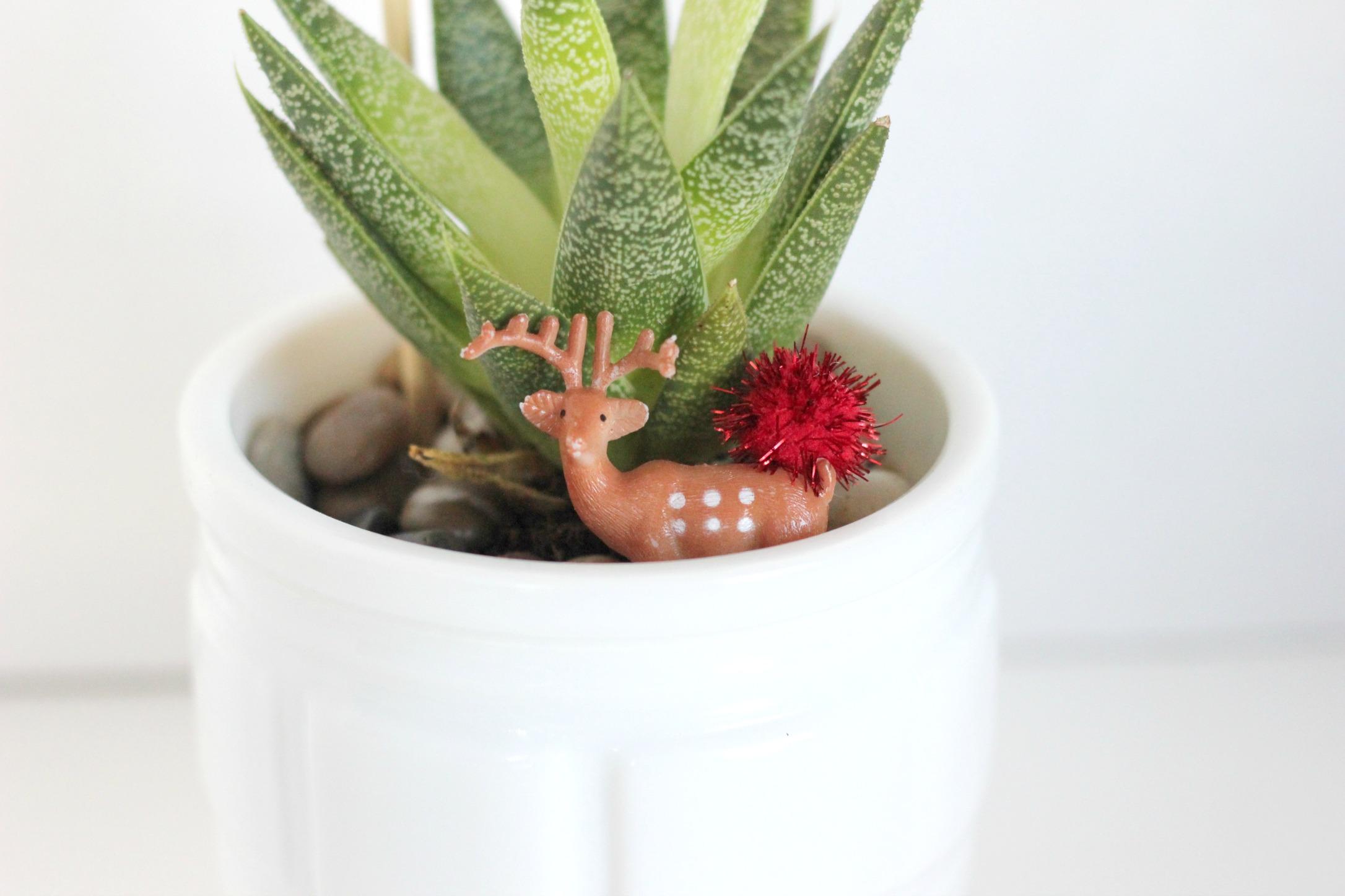 holidaysucculentplant1