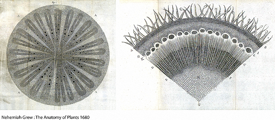 Figure 6 Grew Anatomy of Plants