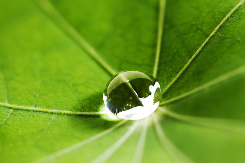 "Ausleitung / Entgiftung  ""Der Keim ist nichts, das Milieu ist alles""   Mikrobiologe Claude Bernard"