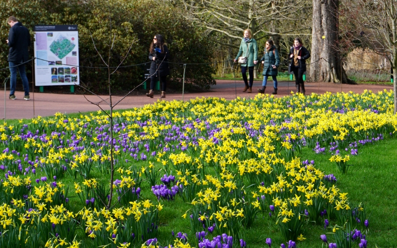 Royal Botanic Gardens 1.jpg