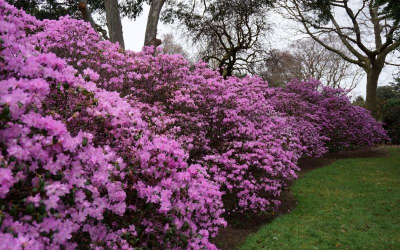 Royal Botanic Gardens 4.jpg