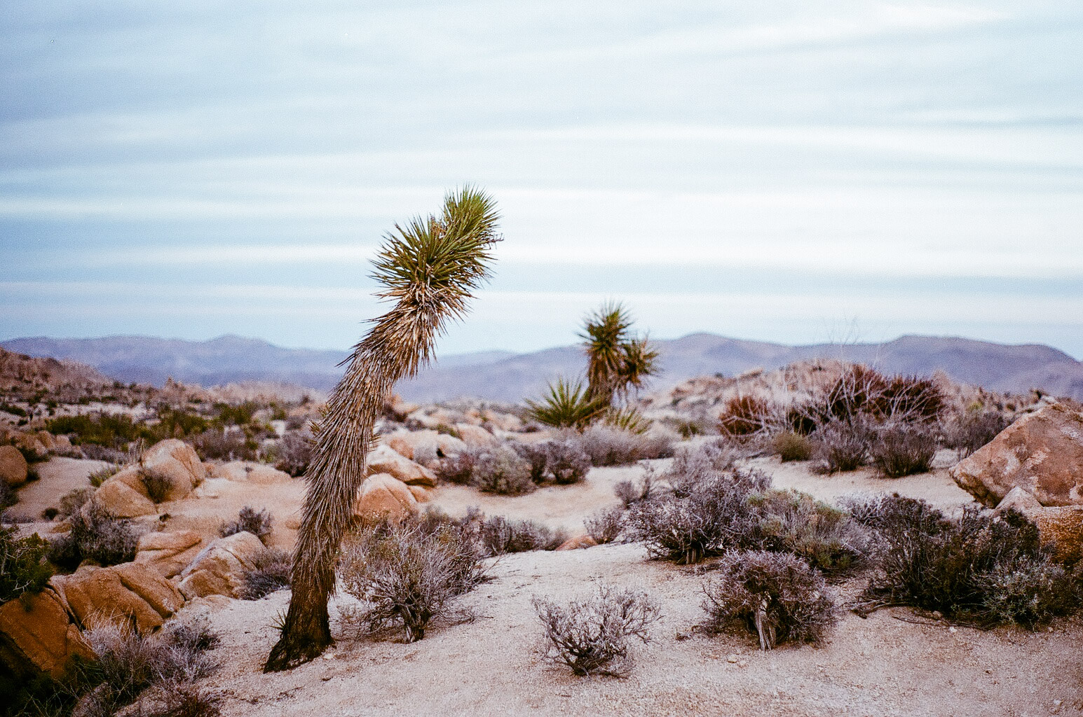 Bad weather turns our planned three nights in Joshua Tree turned into one, but we are still lucky enough to catch a purple fading sunset in this magical place.