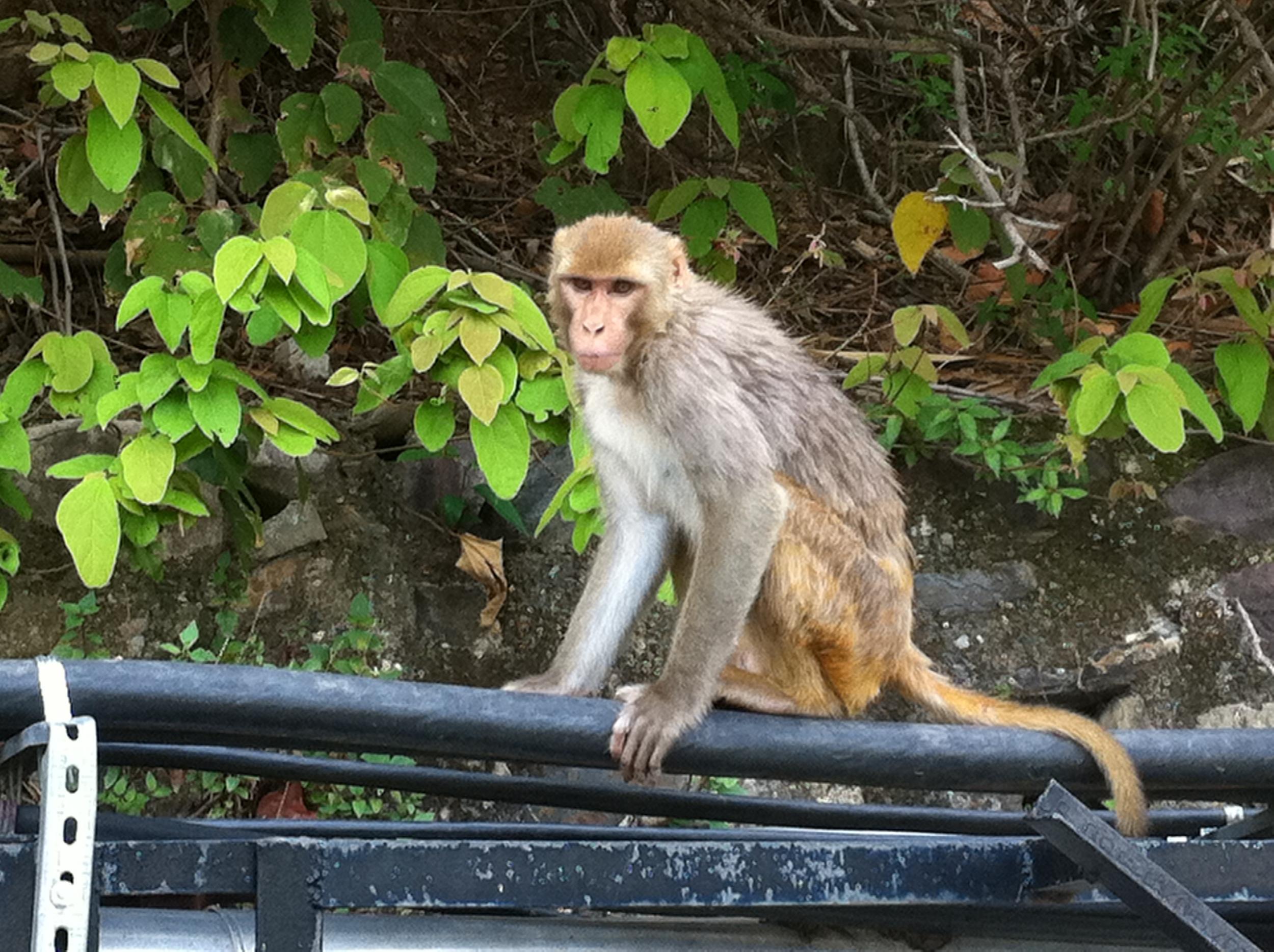 I see you, monkey.