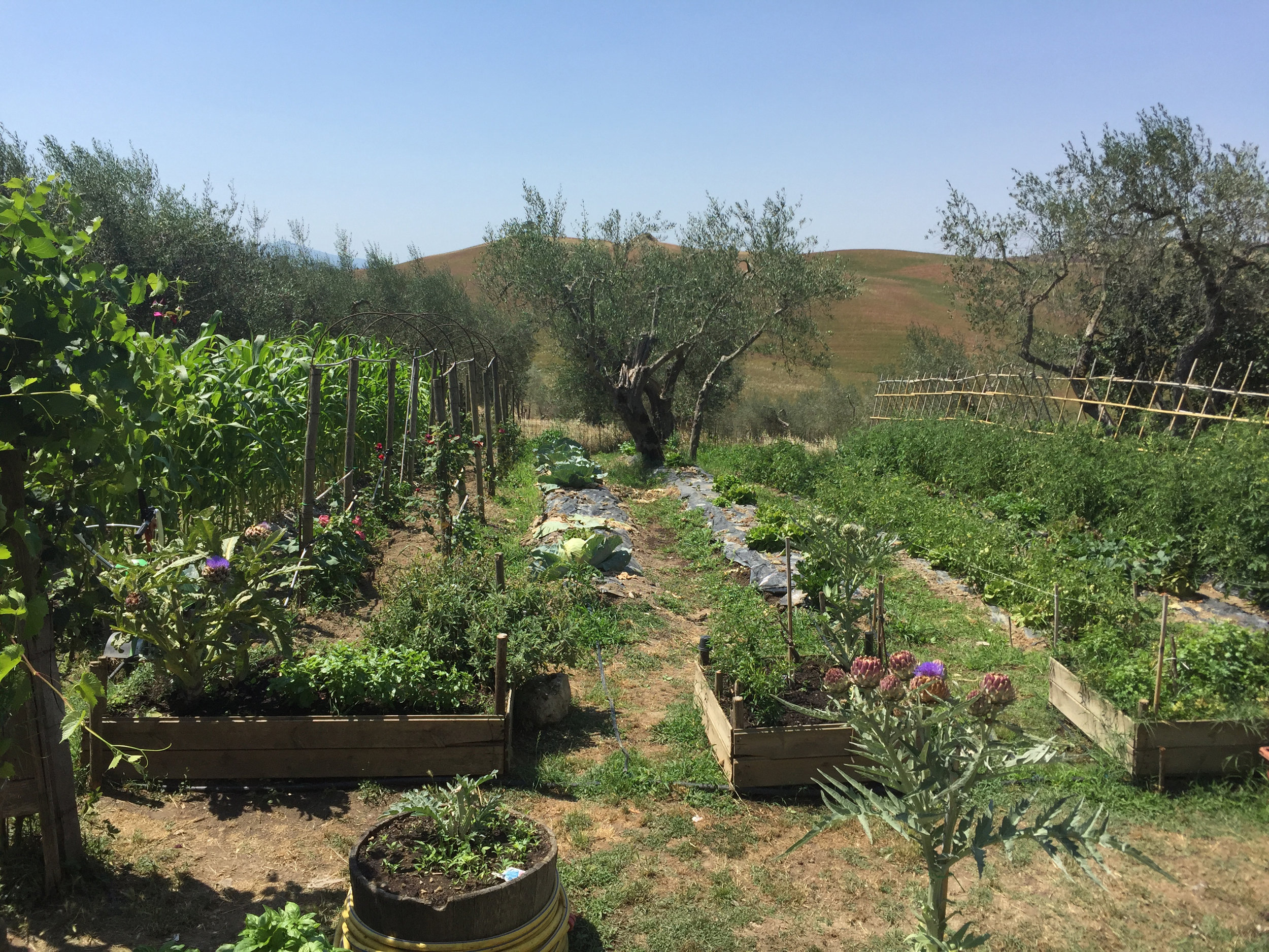 ORGANIC OLIVE OIL FARM AND GARDEN IN TUSCANY