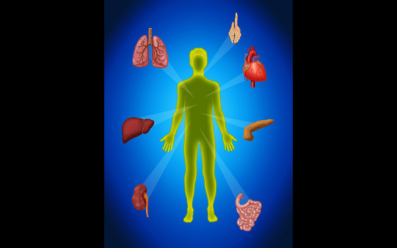 Organ Transplant Illustration - JB5274 ©Monica Schroeder/Science Source