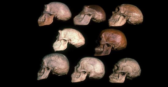 Early Human Evolution