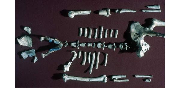 Early Human Specimen Reconstruction