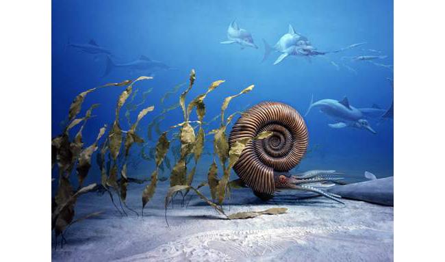Geologic Period: Marine