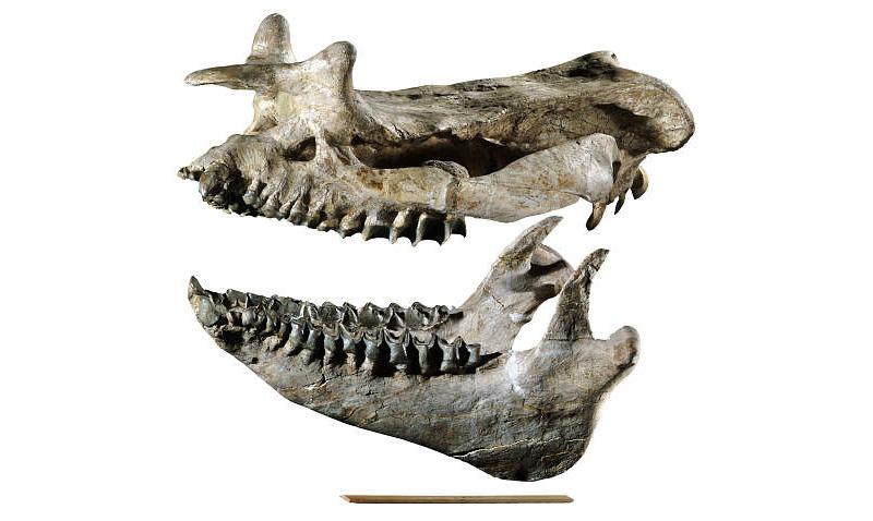 Dinosaur Specimens