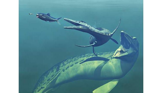 Early Marine Life