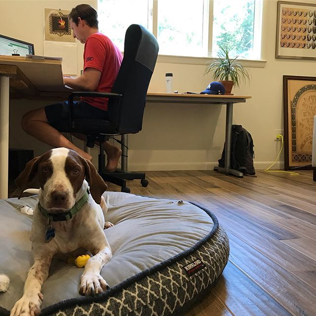 It's always easier to focus with the right company. . . . #studiodog #composerlife #canerossorescue
