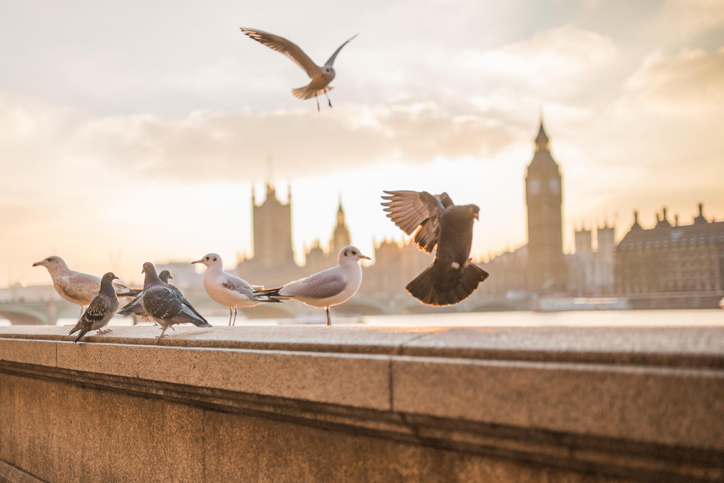london birds.jpg