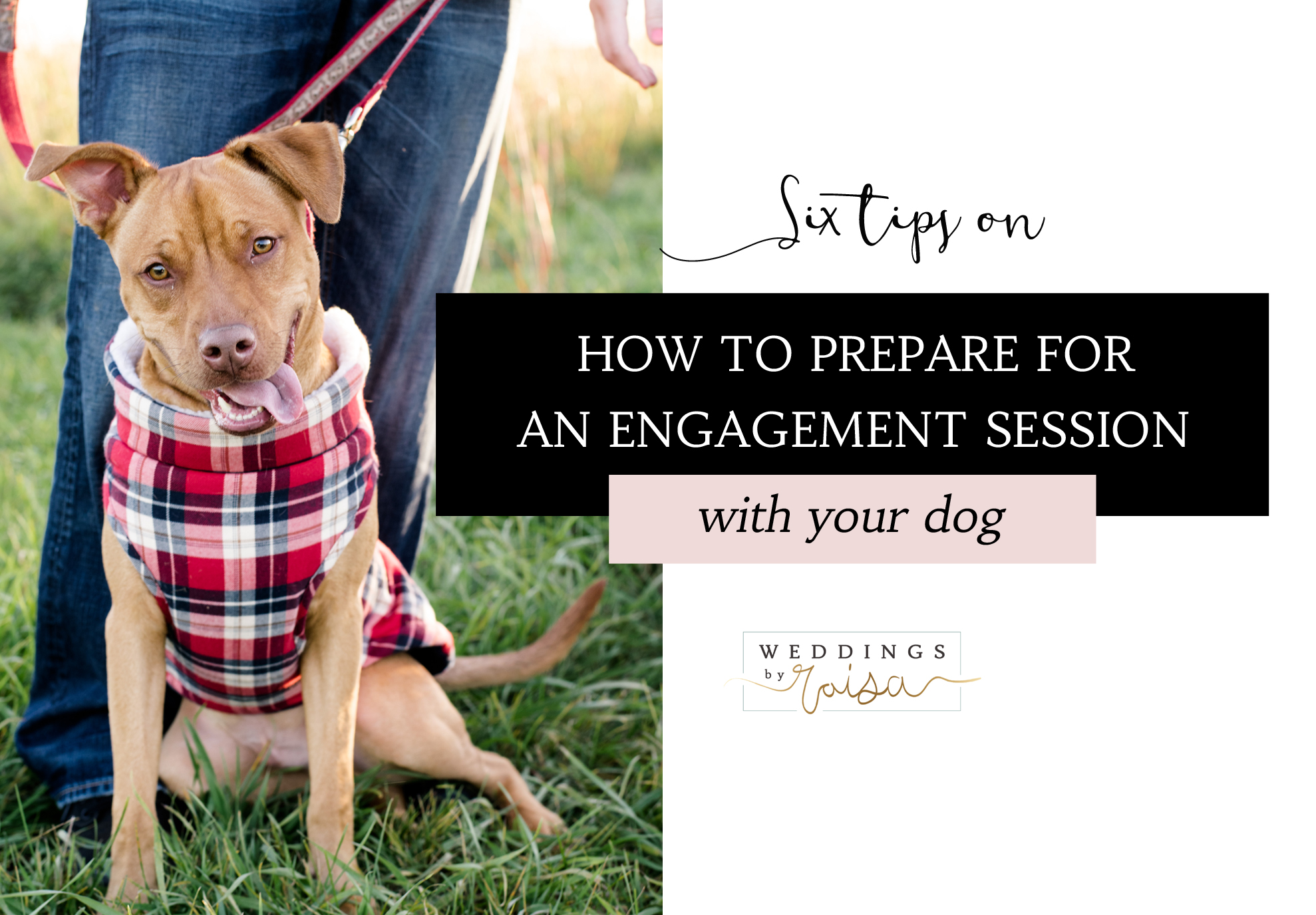 how-to-prepare-for-an-engagement-session-with-your-dog.jpg