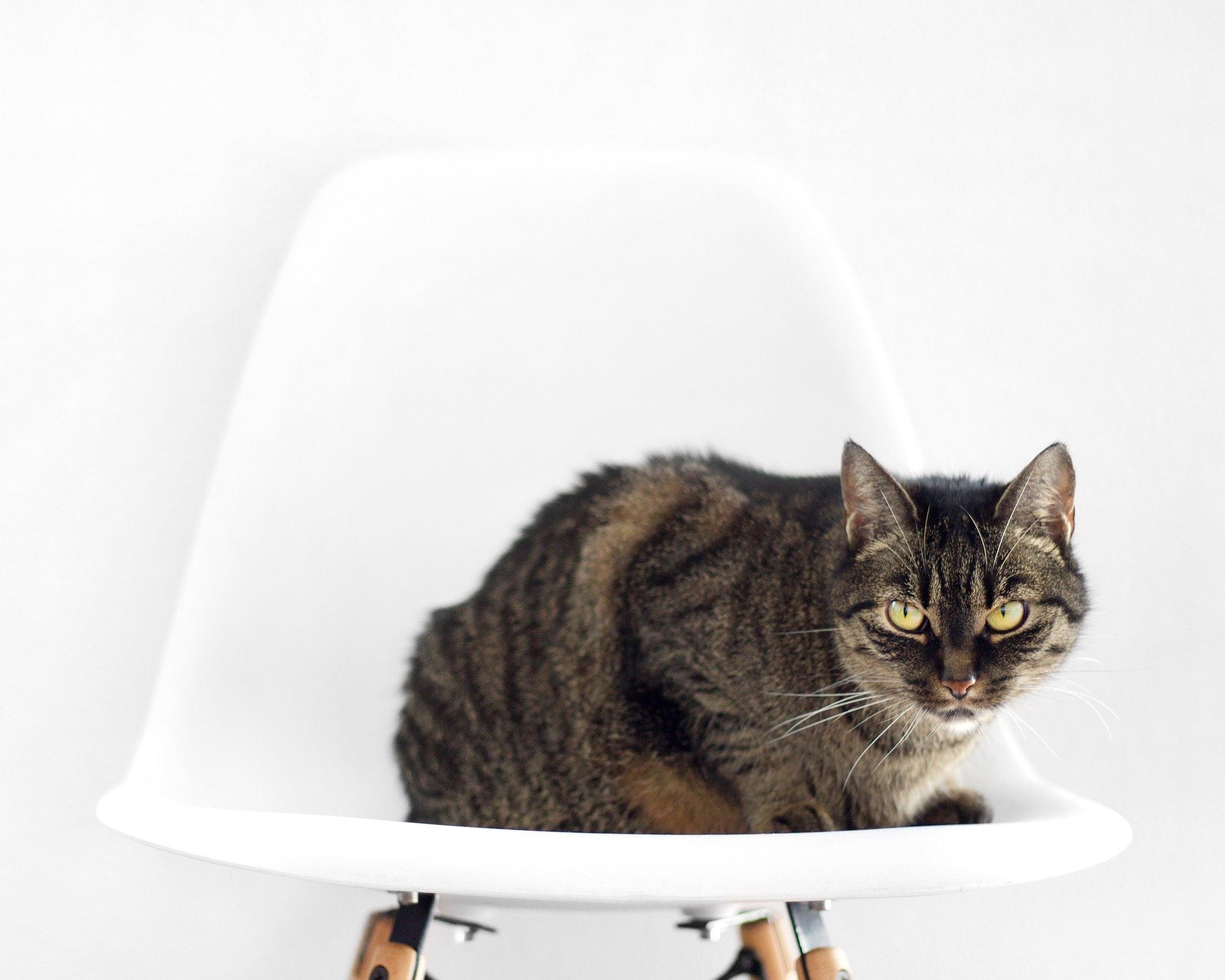 Brown-Tabby-Cat.jpg