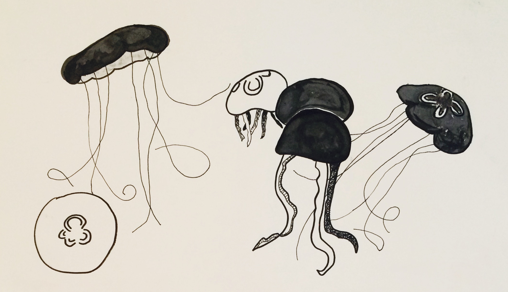 jellyfish 1.png