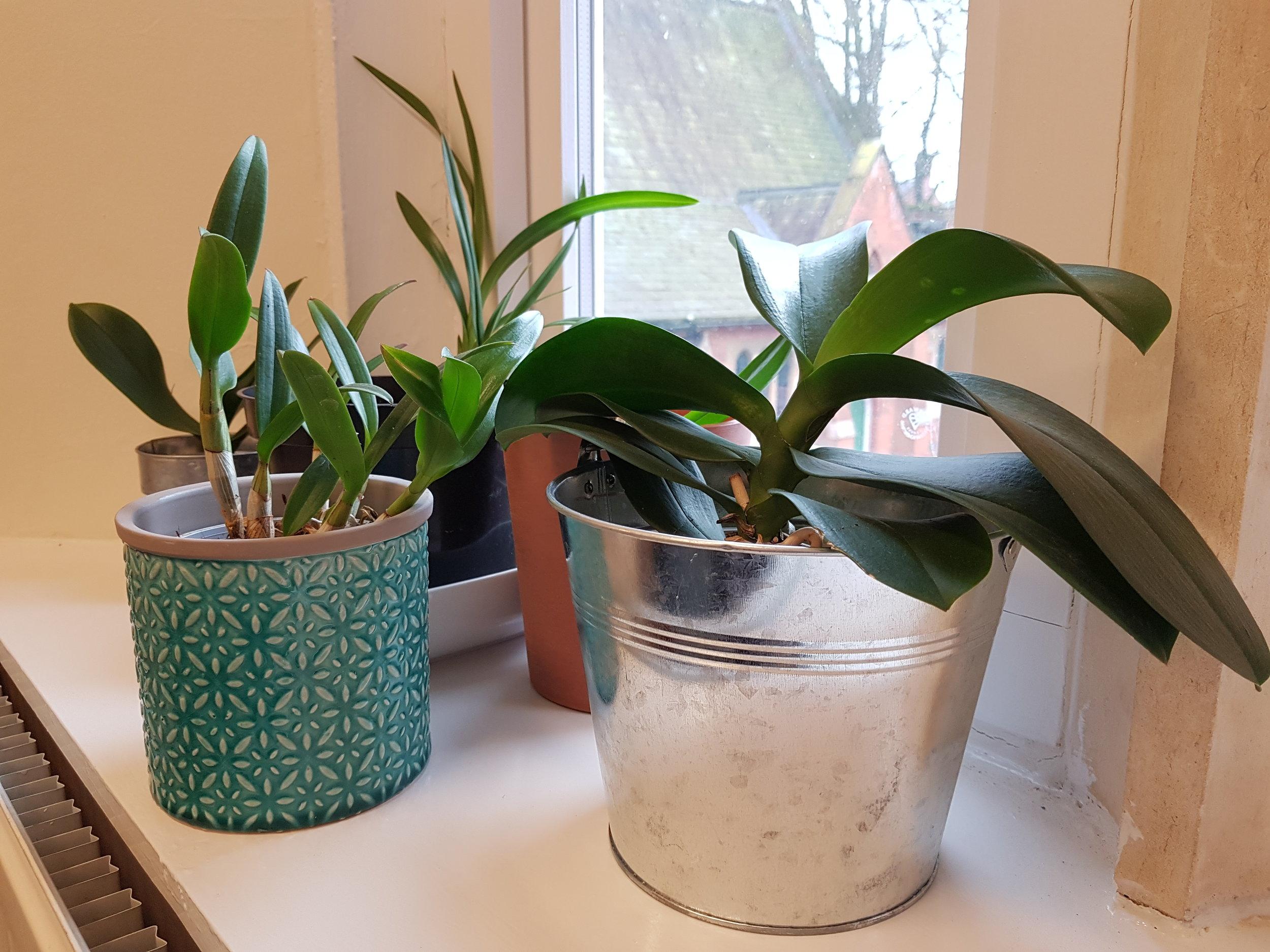 My Orchids.jpg