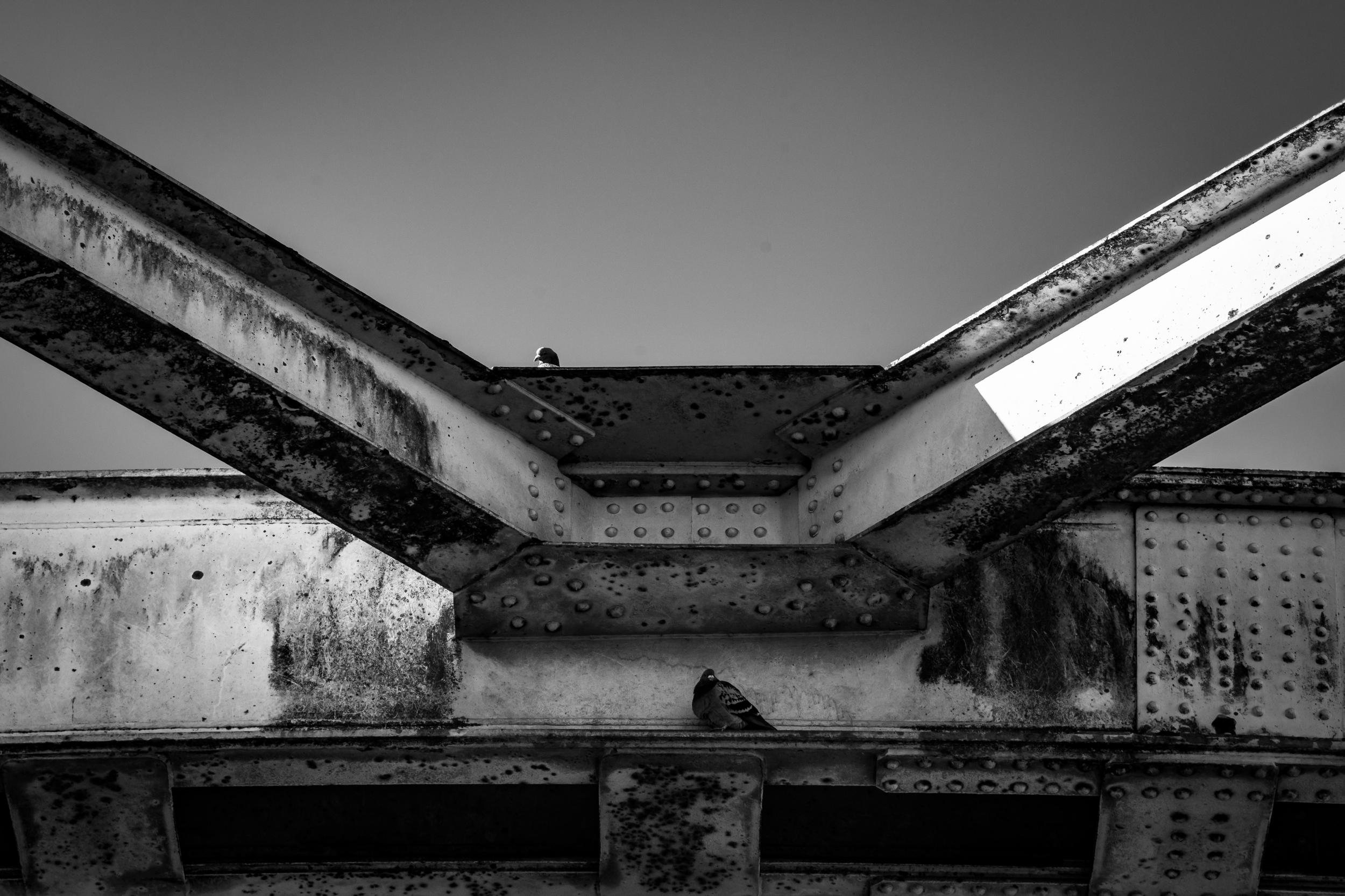 Viewfinder-looks-like-Viviane-Maier-pigeon-bridge-duif-Hansbeke-brug.jpg