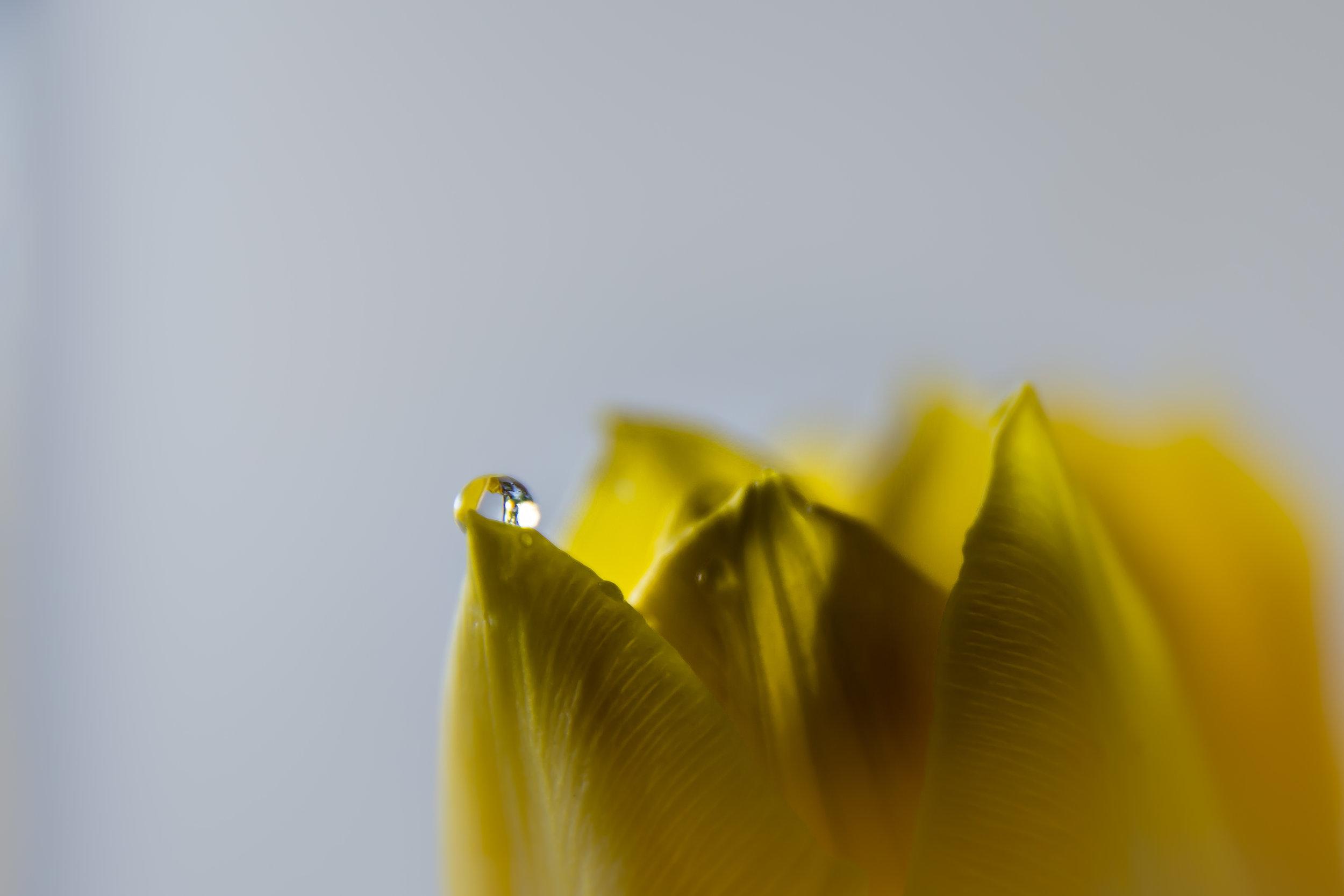 Viewfinder-sven-van-santvliet-op-photofacts-mei-special-geel