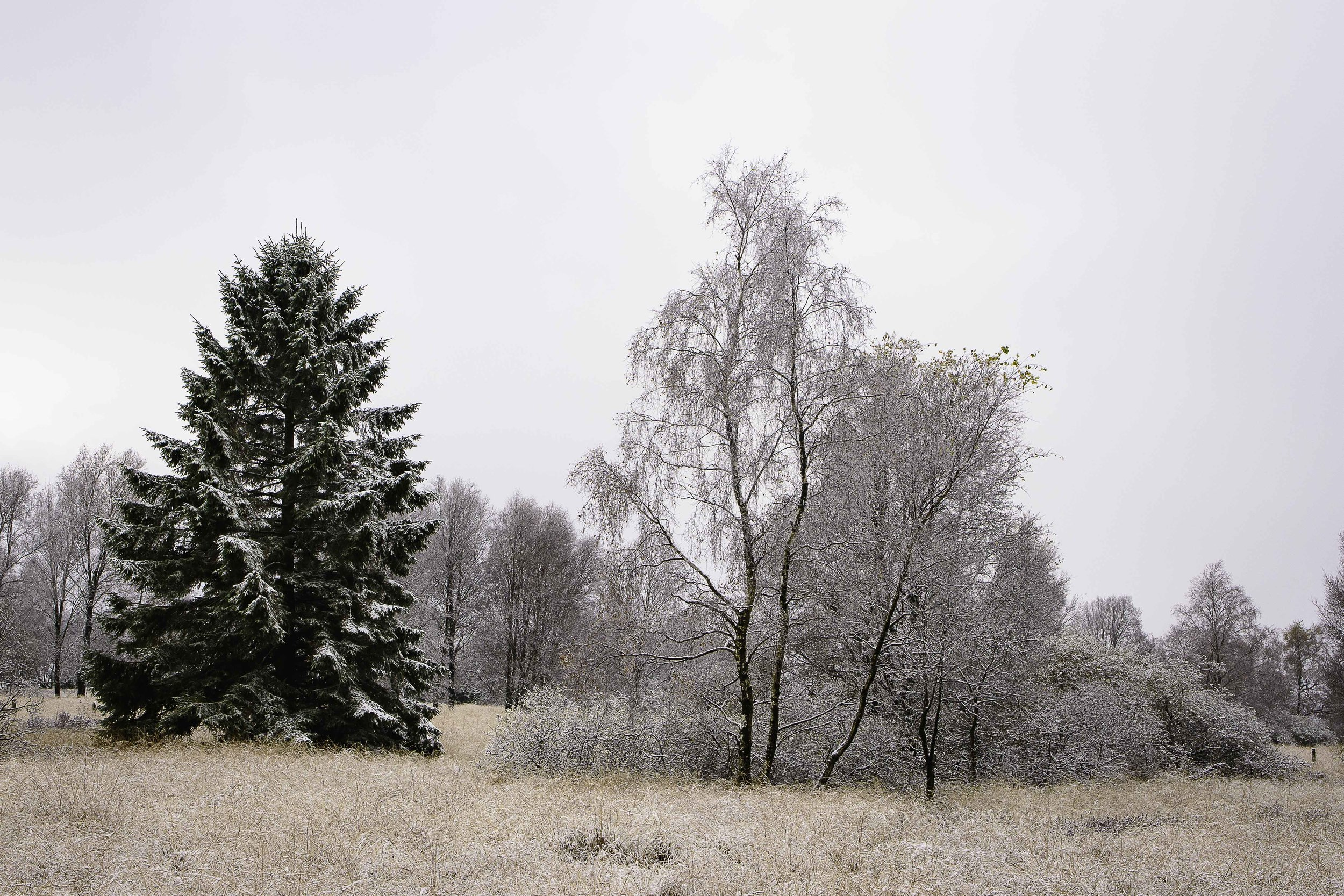 viewfinder-sneeuwlandschap-fotograferen-belichting