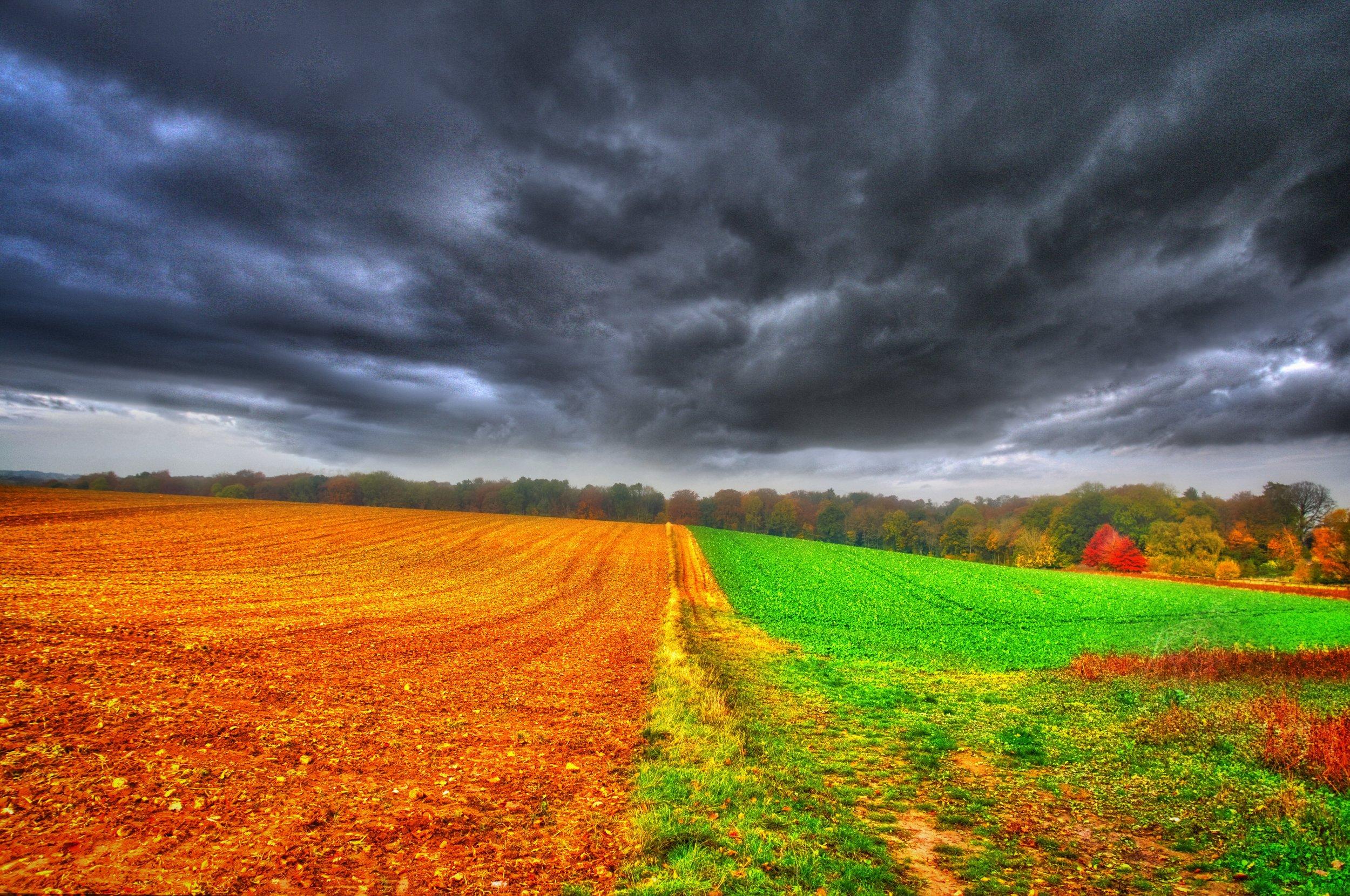 landschap.jpg