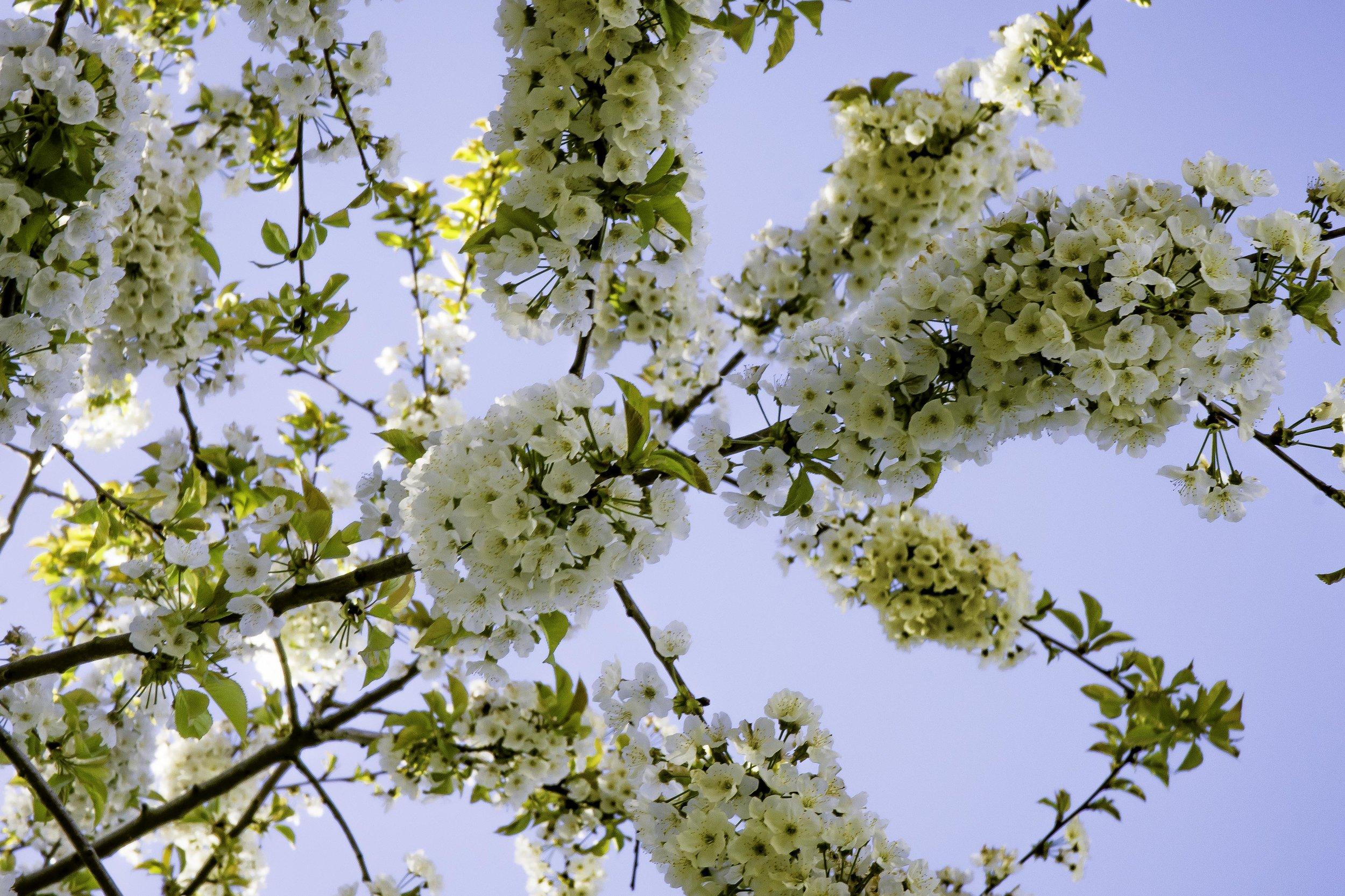 viewfinder-lentebloesem-fotograferen-dicht-bij-huis-1