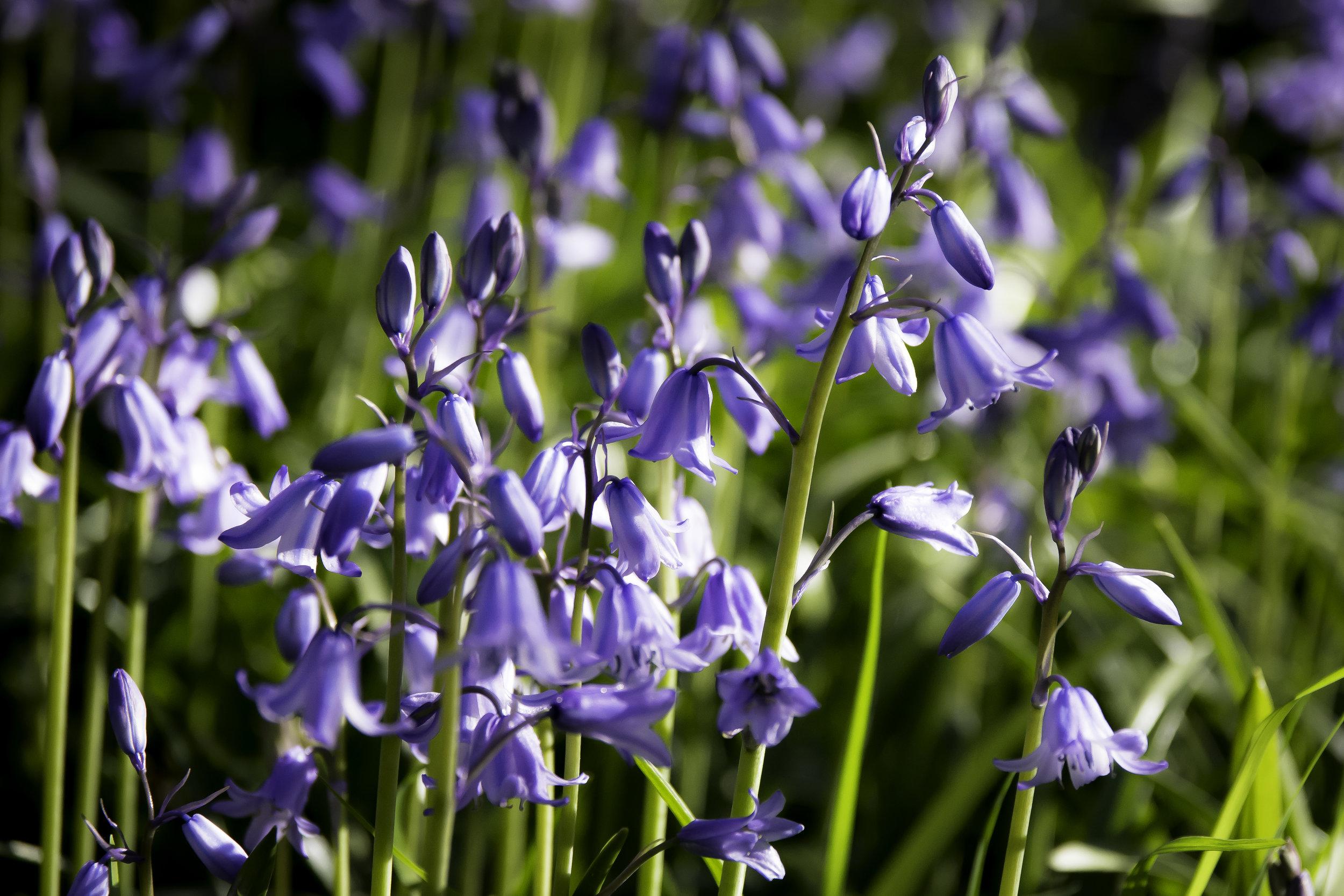 viewfinder-lentebloesem-fotograferen-heerlijk-blauw