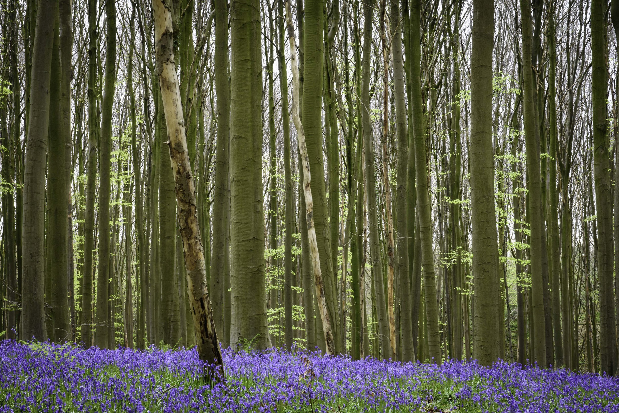 viewfinder-blauwe-hallerbos-fotograferen-tips-natuurfotografie-3