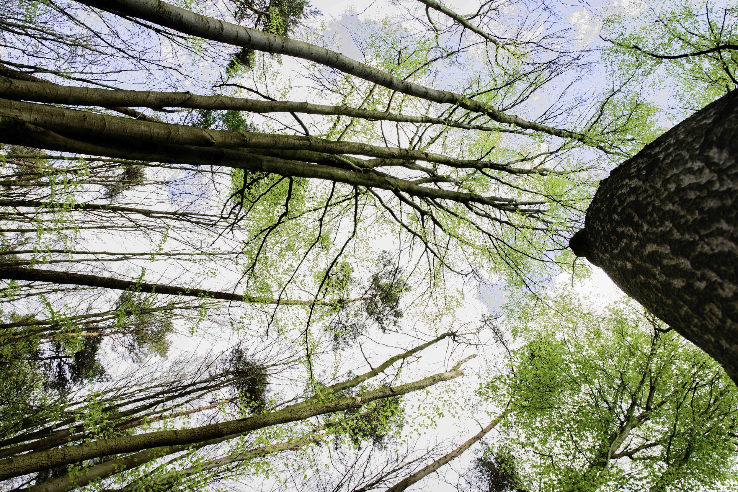 viewfinder-blauwe-hallerbos-fotograferen-tips-eigenzinnige-natuurfotografie-1