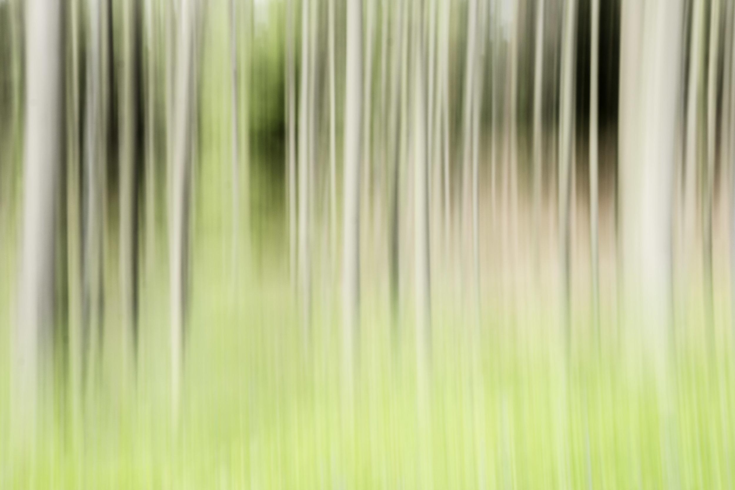 viewfinder-creatief-bos-fotograferen-pastel-5