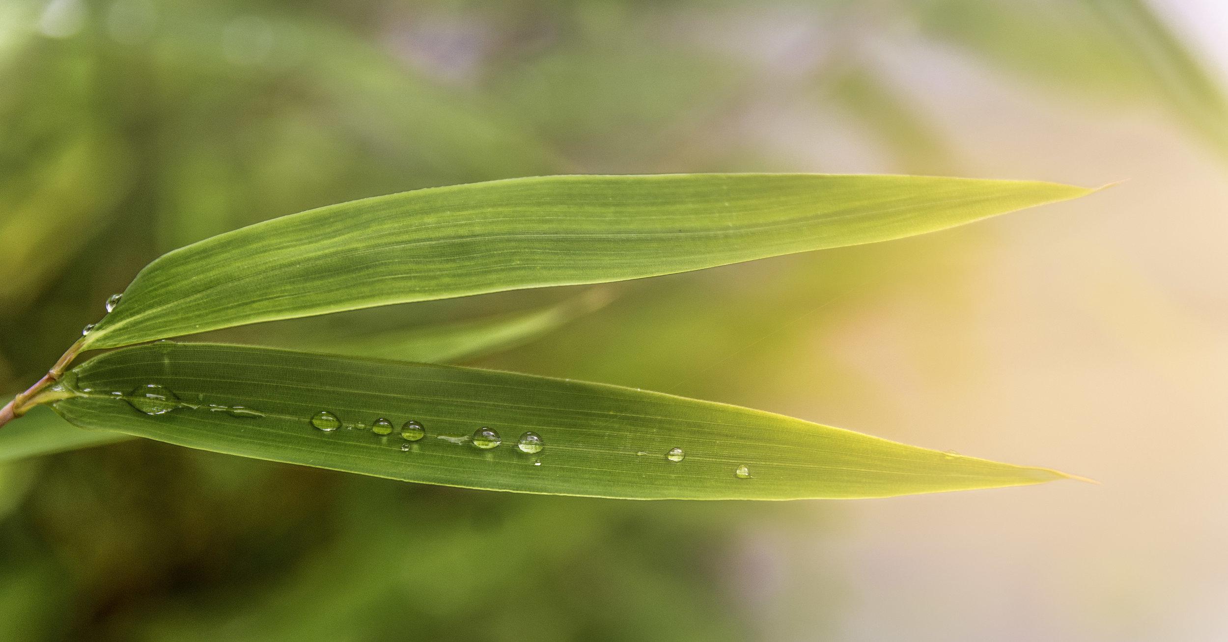 viewfinder-zomaar-zondag-creativeboody-bamboo-leaf
