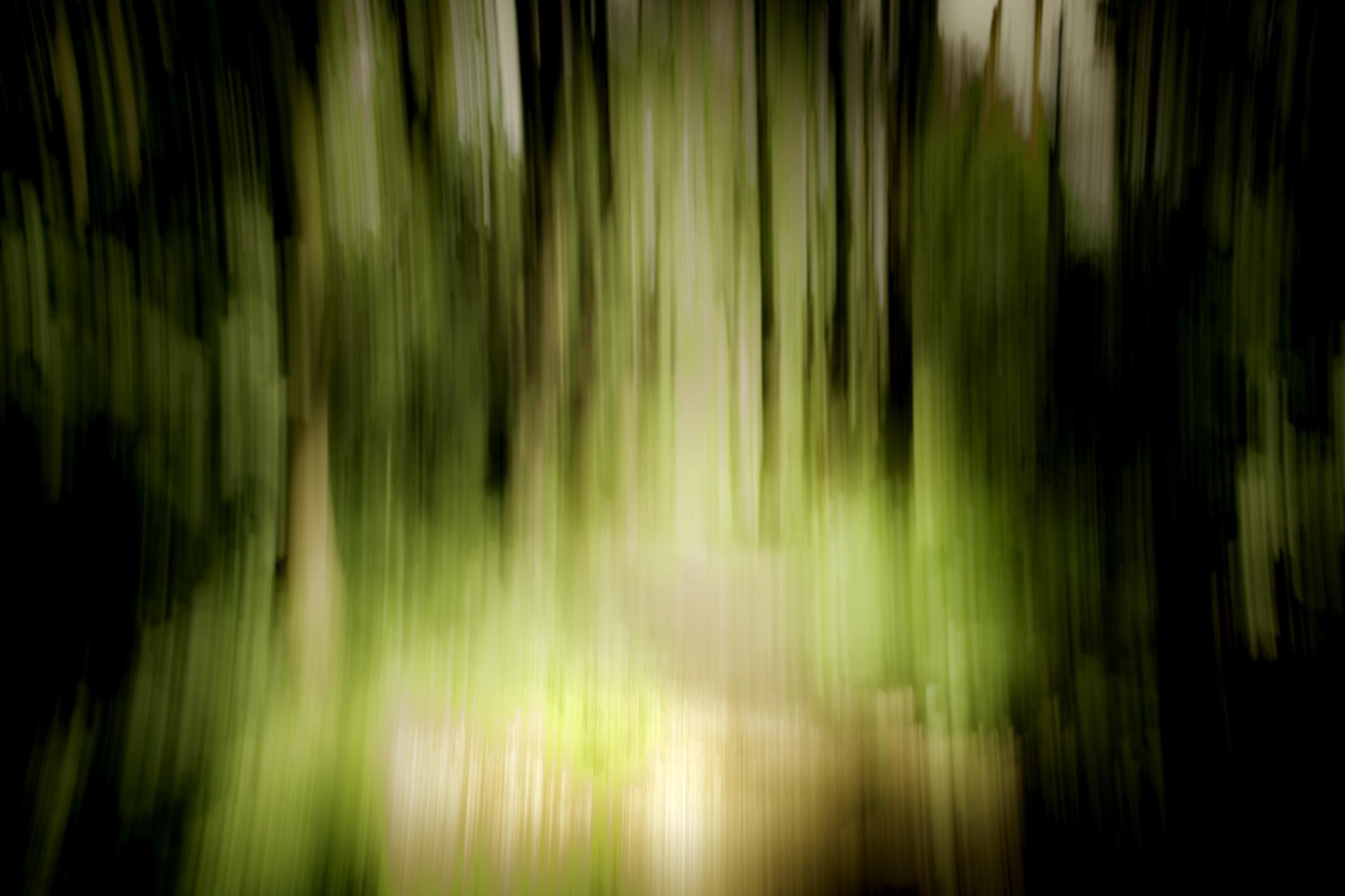 viewfinder-creativeboody-sven-van-santvliet-beweging-in-park-duffel-natuurfotografie-bomen