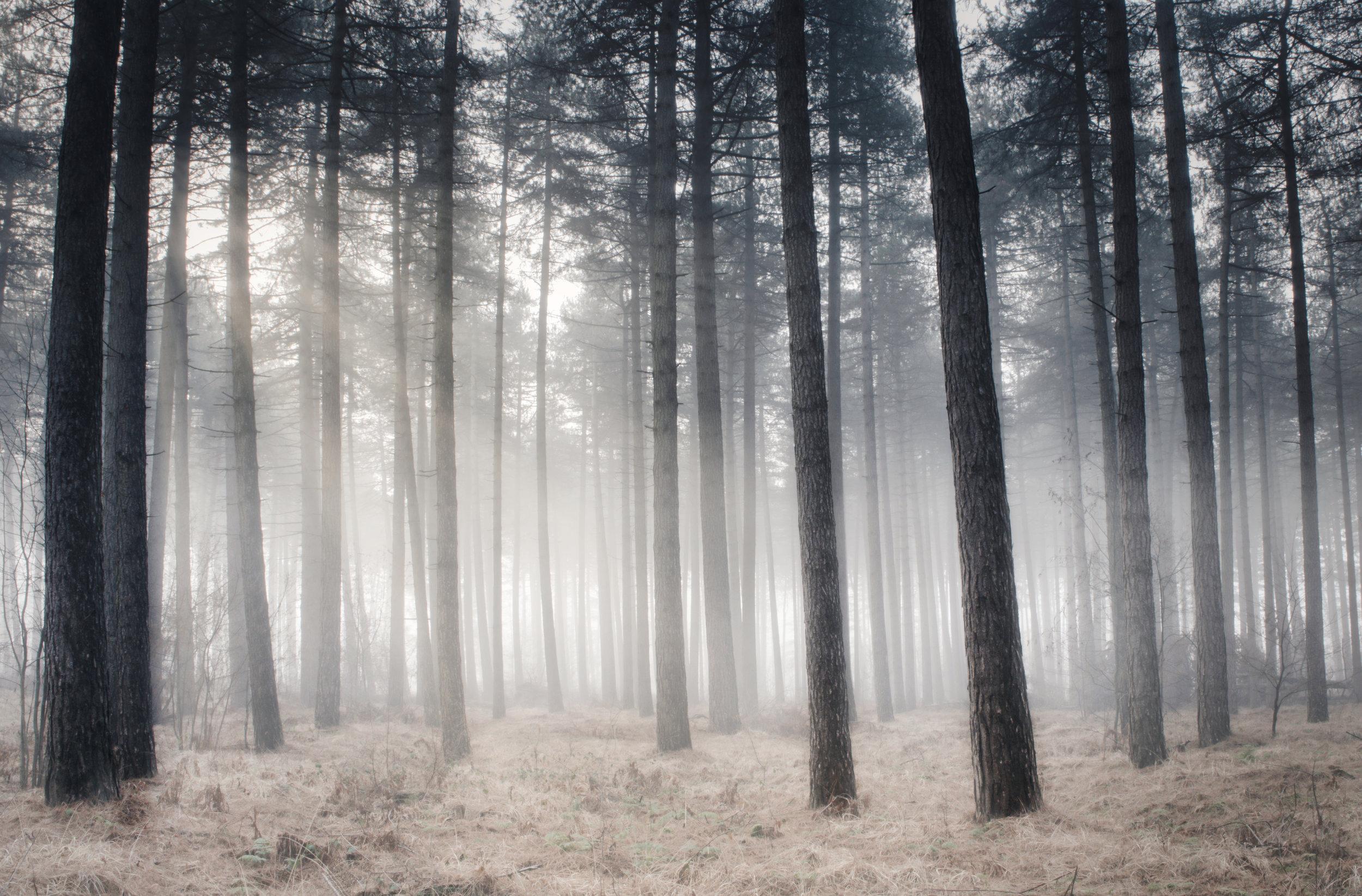mist trees.jpeg