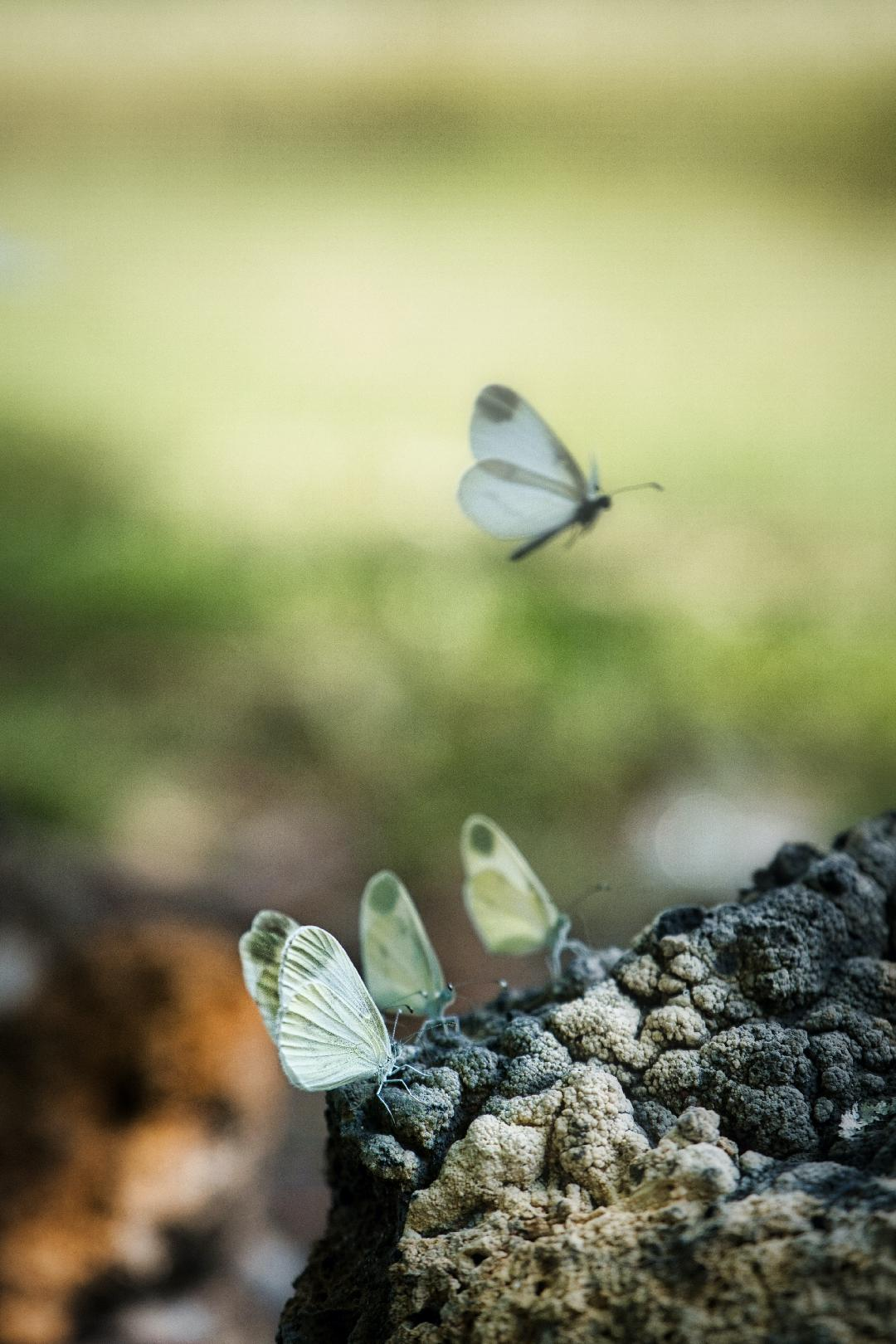 viewfinder-negatieve-ruimte-fotografie-natuurfotografie-vlinders-tinkerbell-peter-pan.jpg