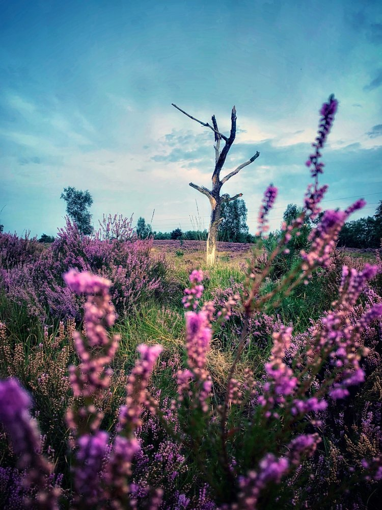 viewfinder-fotolief-park-midden-limburg-heidebloempjes.jpeg