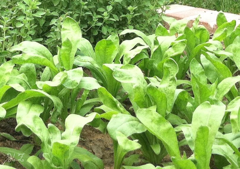 cal. small plants, outside.jpg