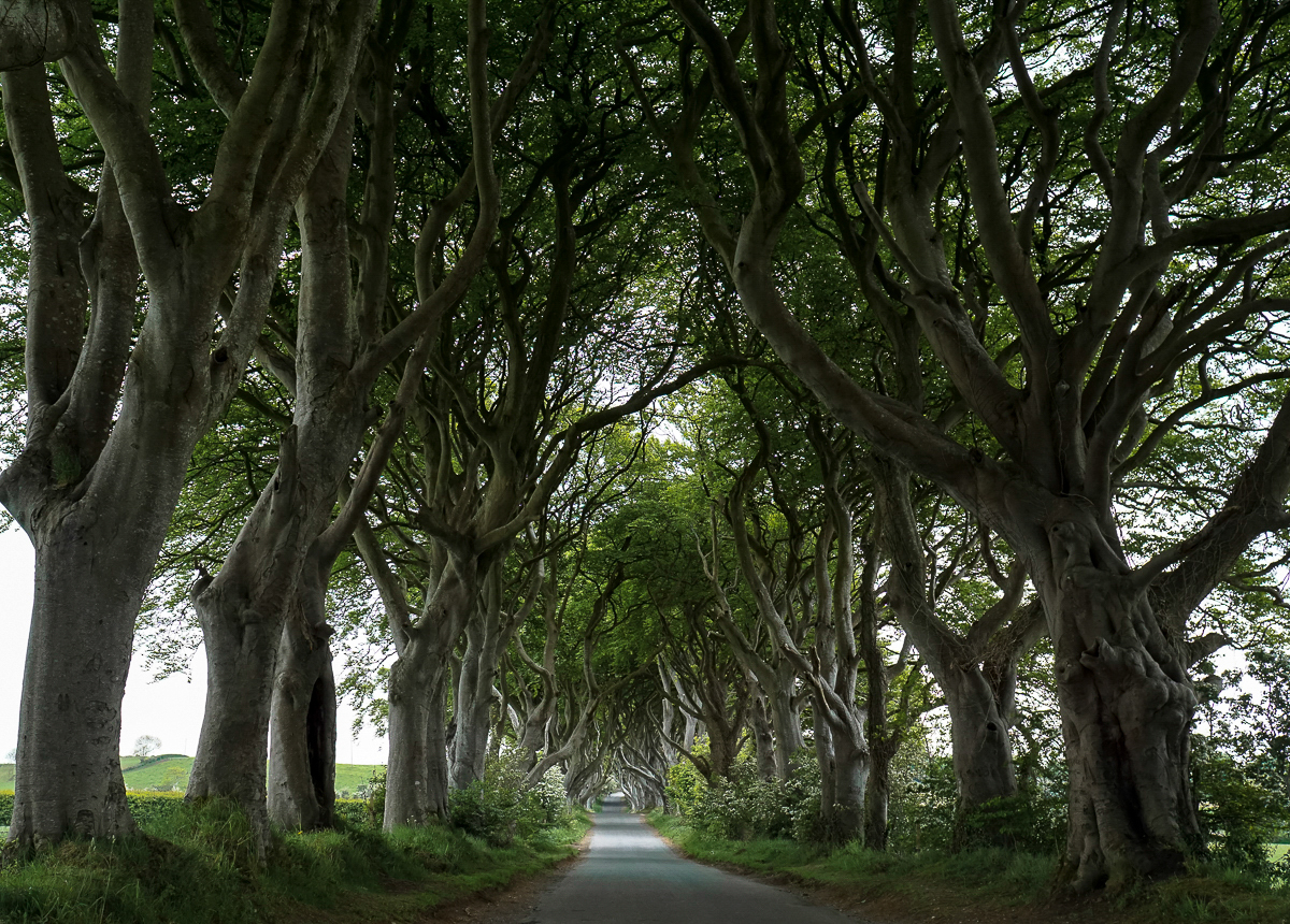 the national parks girl_ireland_sony_irish road trip_the dark hedges.JPG