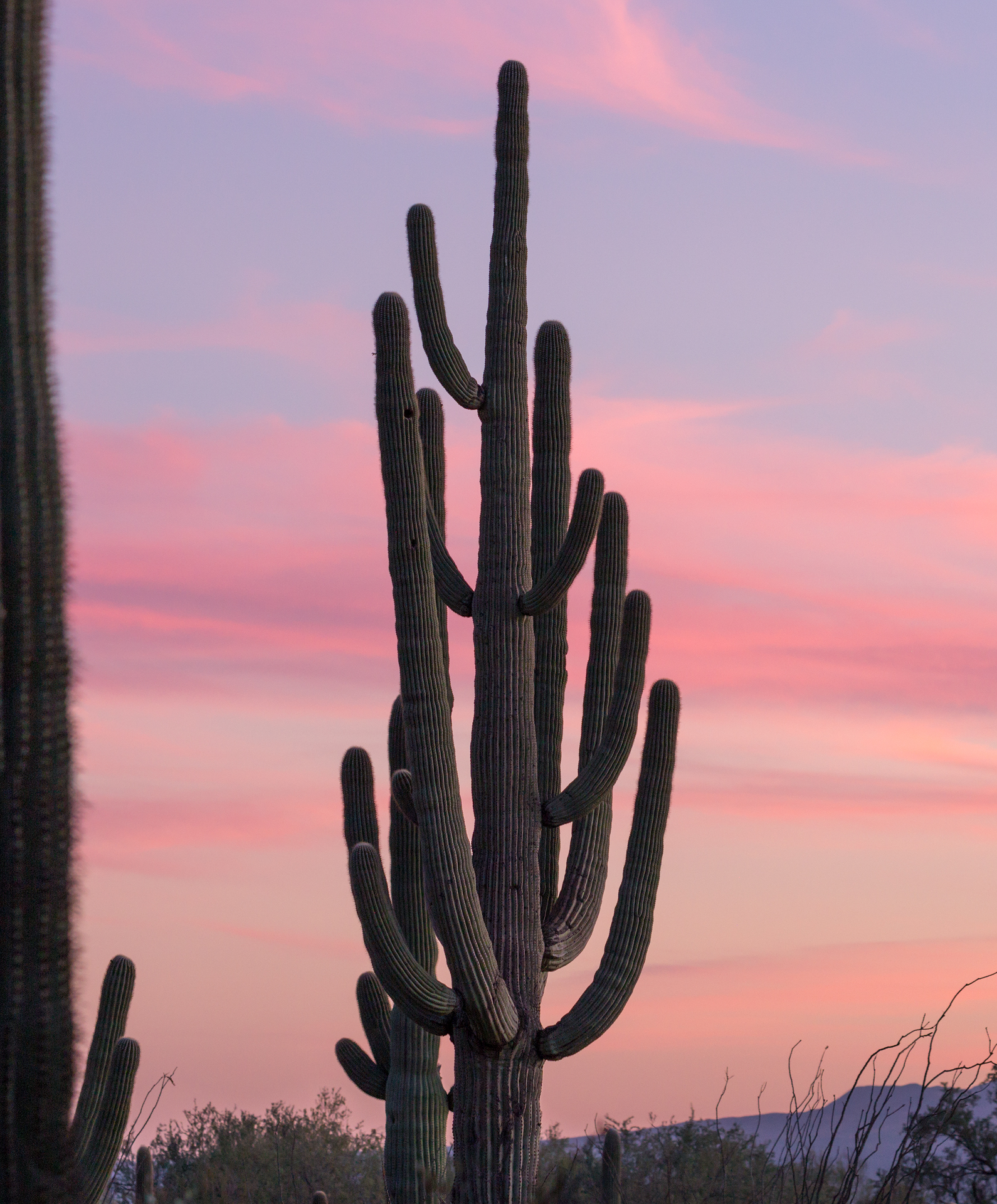 Saguaro National Park --2.jpg