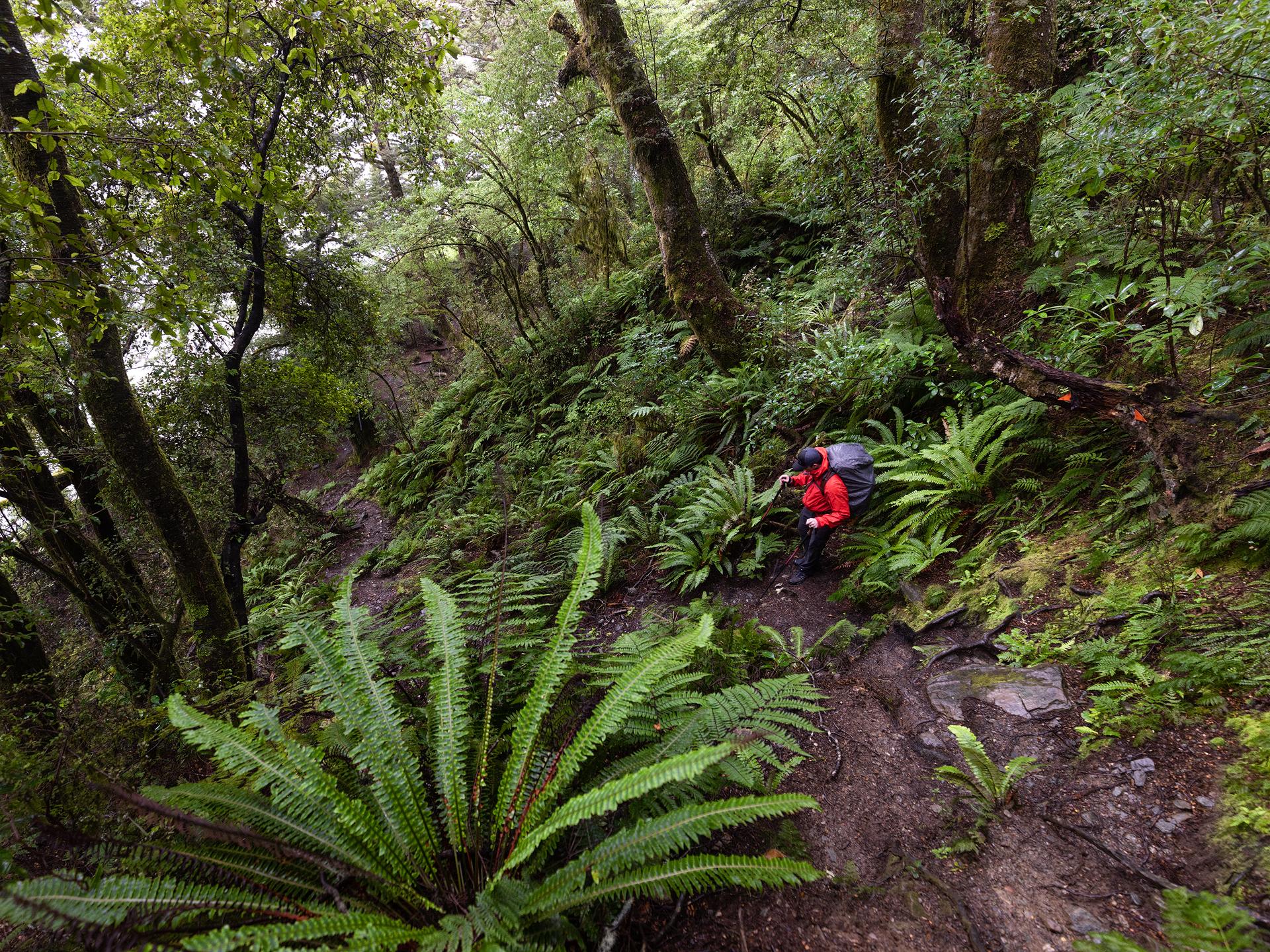 Gillespie Track New Zealand.jpg