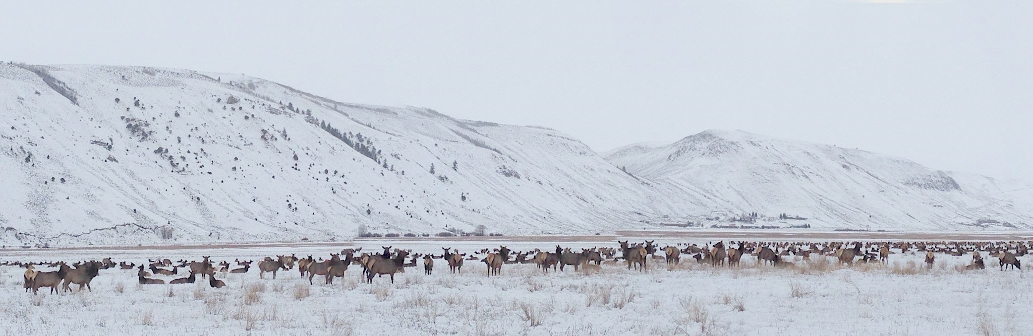 Jackson, Wyoming Elk Refuge