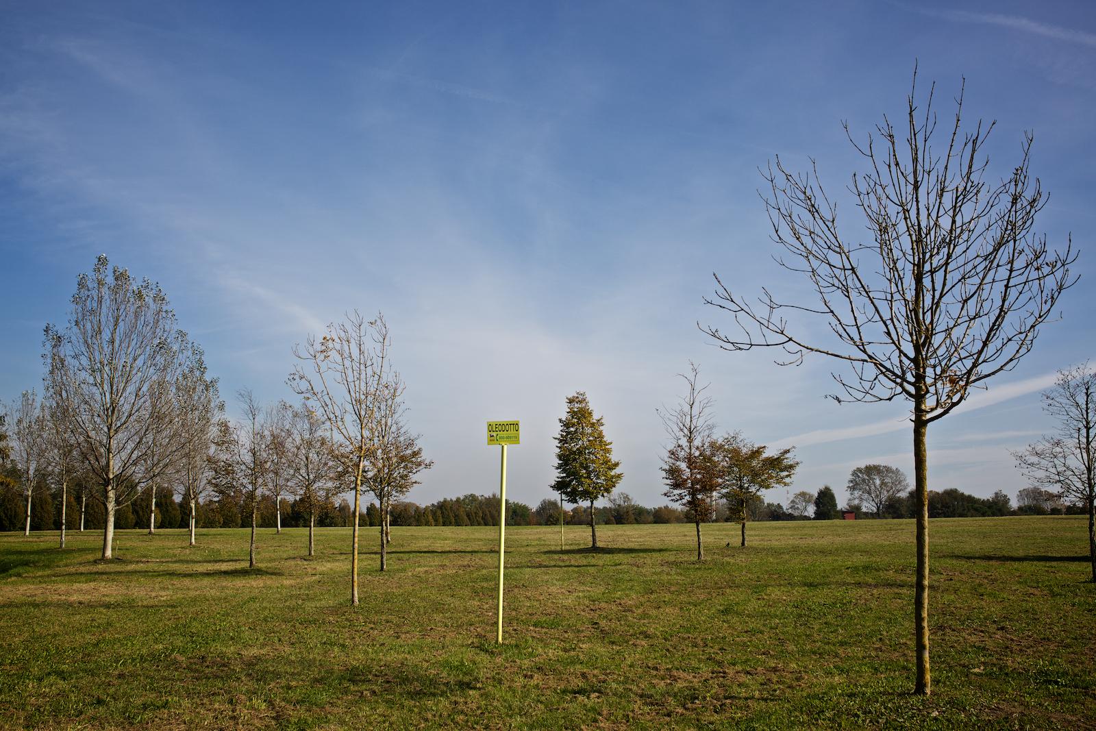 In alcune zone del parco di San Giuliano gli alberi non crescono a causa della presenza nel terreno di agenti contaminanti. Parco San Giuliano (Mestre) Novembre 2014.
