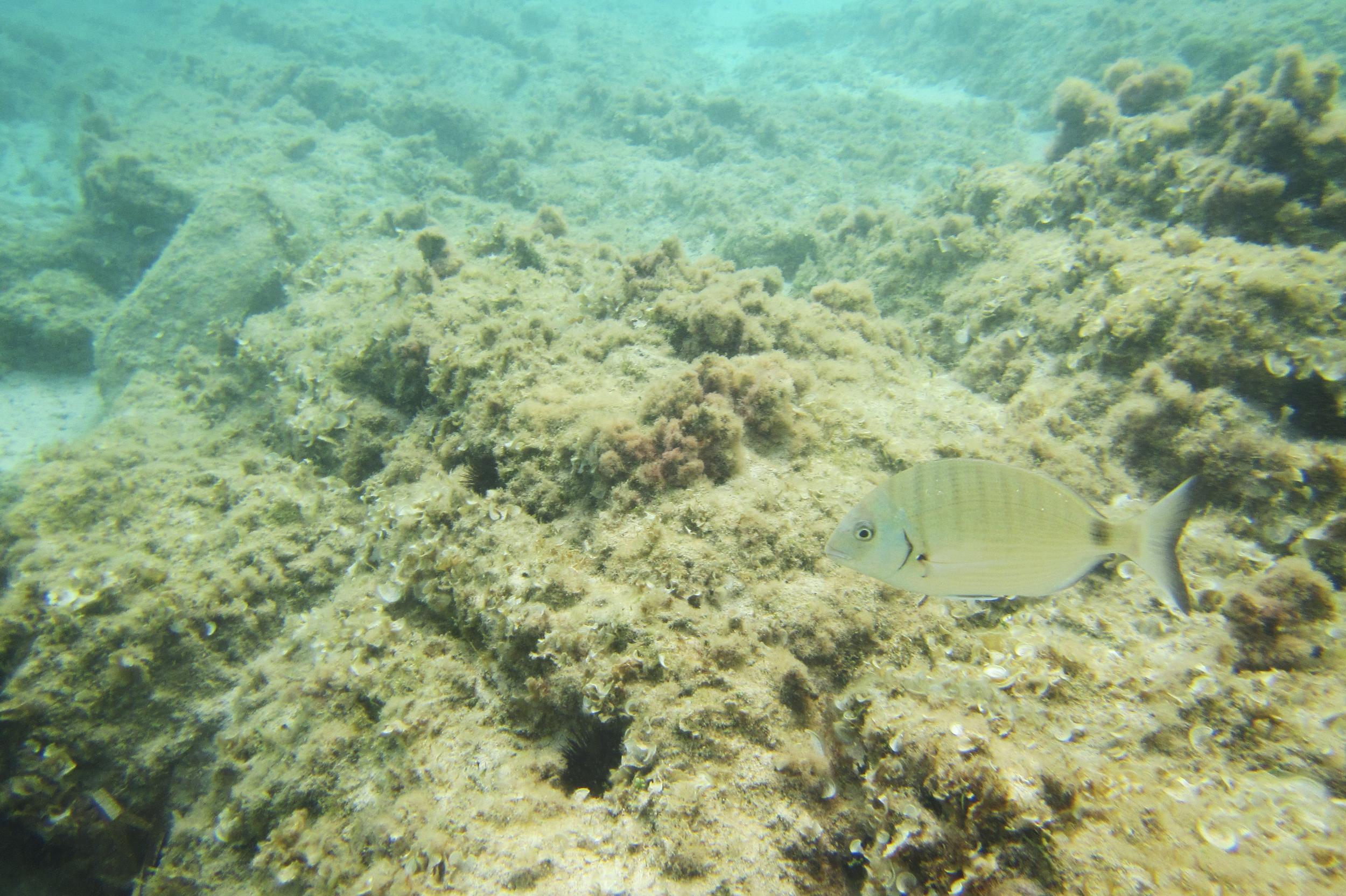 Porto Torres, settembre 2014. L'inquinamento marino provoca danni all'intero ecosistema acquatico e rientra nella catena alimentare dell'uomo attraverso il consumo di pesce.