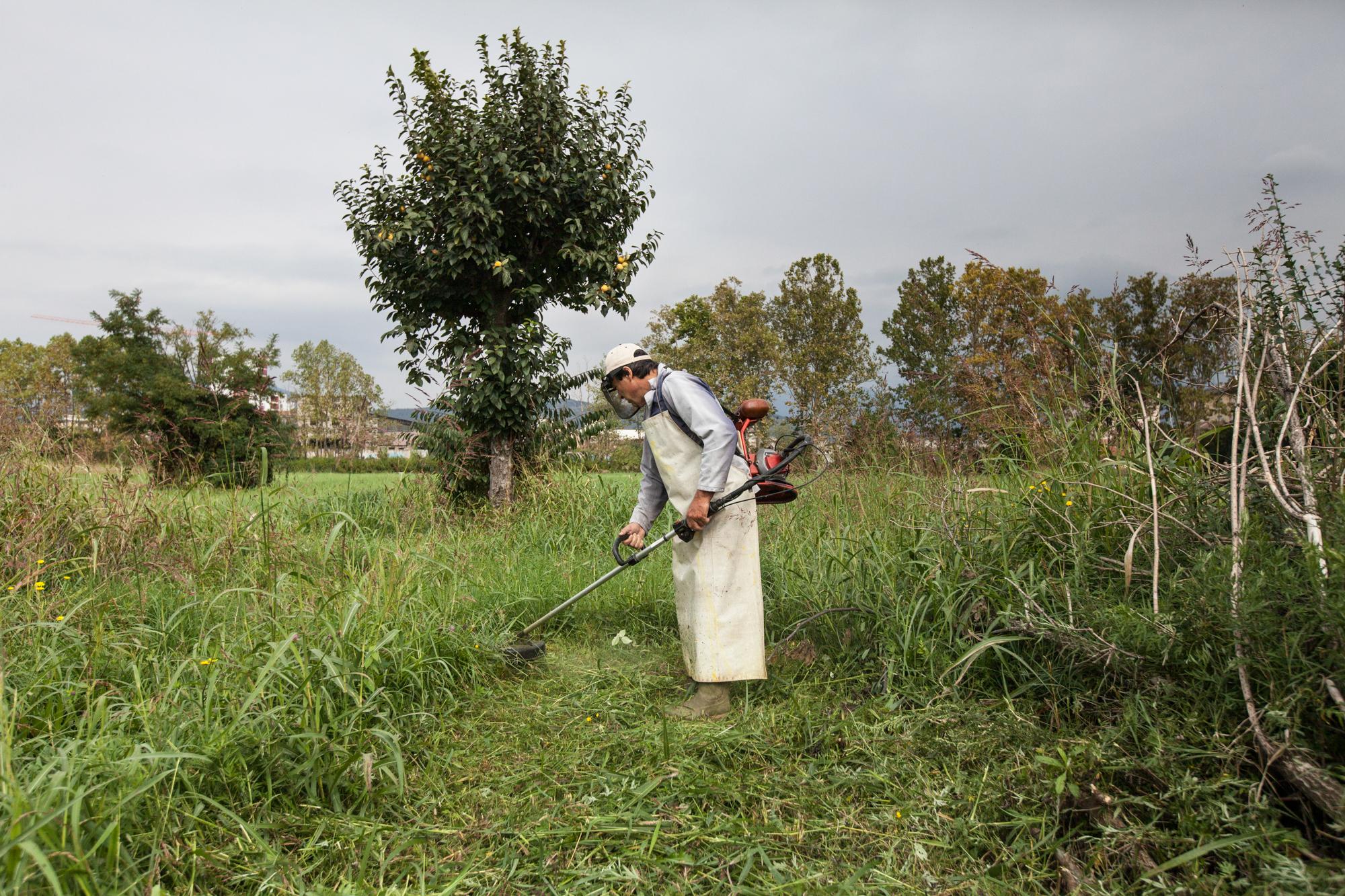Un agricoltore taglia l'erba del suo terreno, nonostante le ordinanze comunali vietino il contatto diretto con il terreno.Brescia / Italia. Ottobre 2013