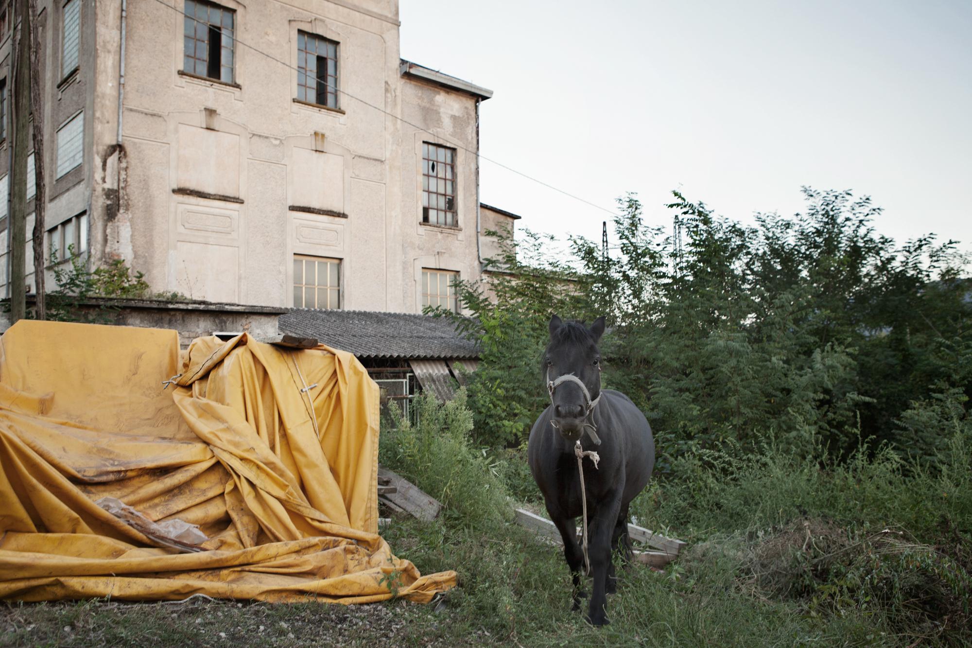 La cultura contadina tipica della zona condivide i pochi spazi verdi con manufatti industriali in disuso.Colleferro, novembre 2013