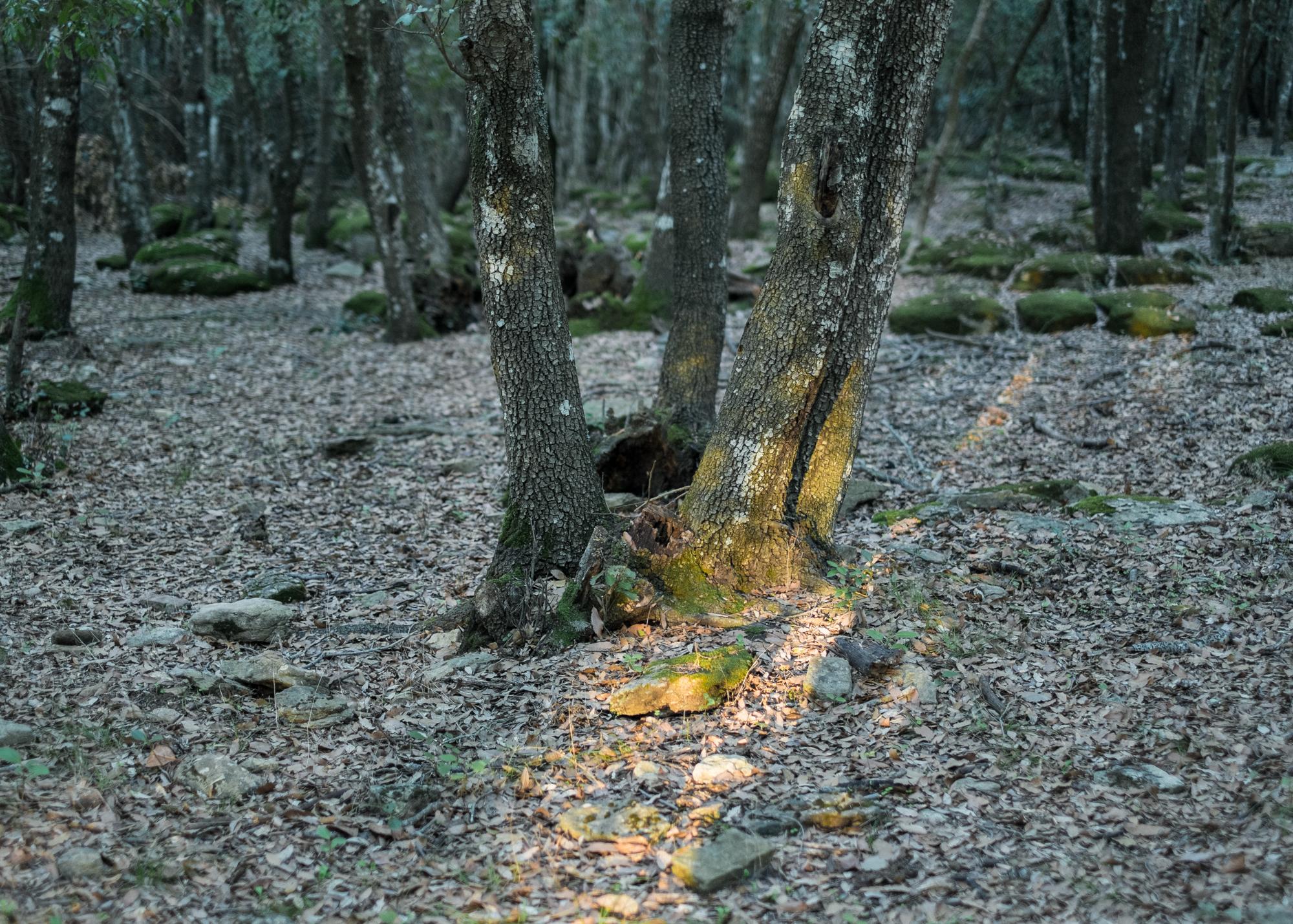 Corre Pruna, area D, comune di Villaputzu, poligono a terra.