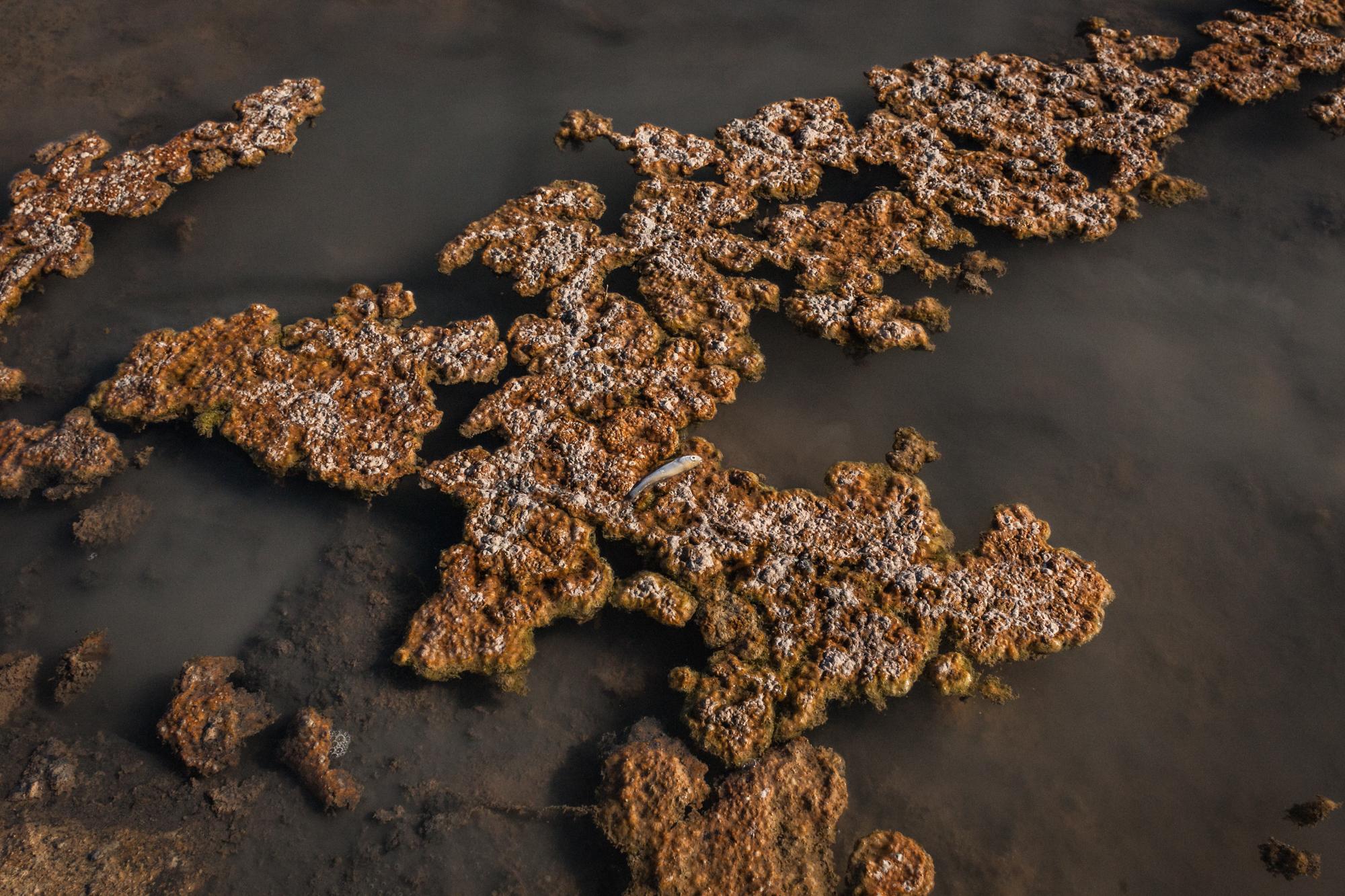 Fiume Basento in zona Ferrandina (MT), 2015. Nel 2013 indagini dell'ARPA Basilicata hanno evidenziato lo stato critico del fiume Basento: sono presenti sostanze nocive e cancerogene tanto nelle acque superficiali quanto in quelle profonde. Il suo inquinamento è causa di morte di varie specie ittiche.
