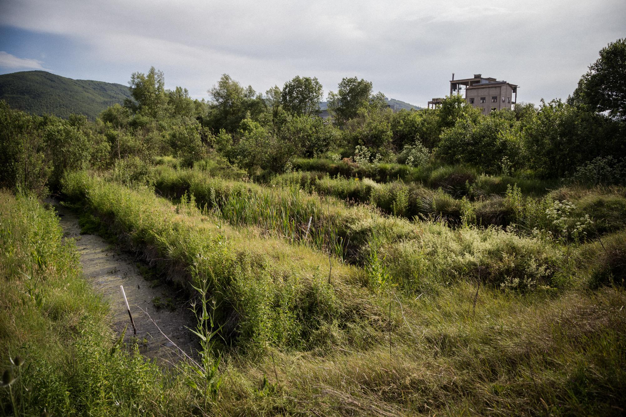 """L'""""Area Fosfogessi"""" della Liquichimica Meridionale. Si presenta verde e ricca di vegetazione eppure è contaminata dai fanghi industriali. La precarietà delle telature di contenimento dei rifiuti e la scarsa impermeabilizzazione delle vasche hanno facilitato il processo. Tito (Area S.I.N. Ex Liquichimica), Giugno 2015"""