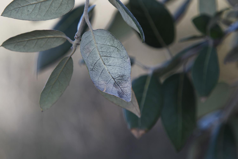 """Secondo le indagini le foglie della vegetazione dei territori circostanti alla centrale, ma anche grappoli d'uva, altri prodotti della terra e perfino le mani degli agricoltori sono ricoperti da polvere nera derivante proprio dal carbone. Durante un'udienza del 28 ottobre 2013 l'ispettore della Digos di Brindisi, Alessandro Cucurachi fece proiettare alcune foto """"choc"""" a dimostrazione dell'accusa."""