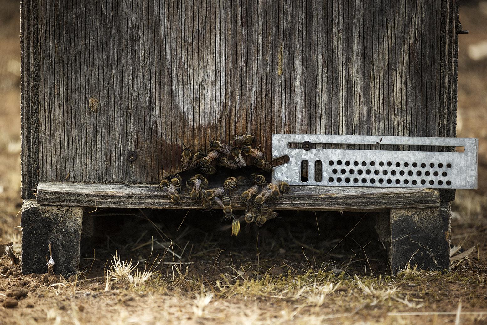 Niscemi (CL), Agosto 2017. Il disorientamento degli insetti sociali e impollinatori, api in particolare, provocato dal campo elettromagnetico del MUOS, può portare conseguenze a catena su tutto l'ecosistema presente, con danni alla flora spontanea e all'agricoltura locale. © Chiara Faggionato