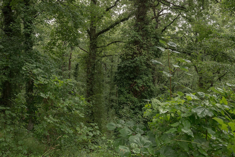 ITALIA, 2017, Toscana. Bosco sul Monte Amiata. Il 44% del territorio toscano è occupato da boschi, il 39% da aree coltivate e per il 13% da pascoli o aree desertiche. Le aree urbane rappresentano soltanto circa il 4% del suolo © LUCA CERABONA